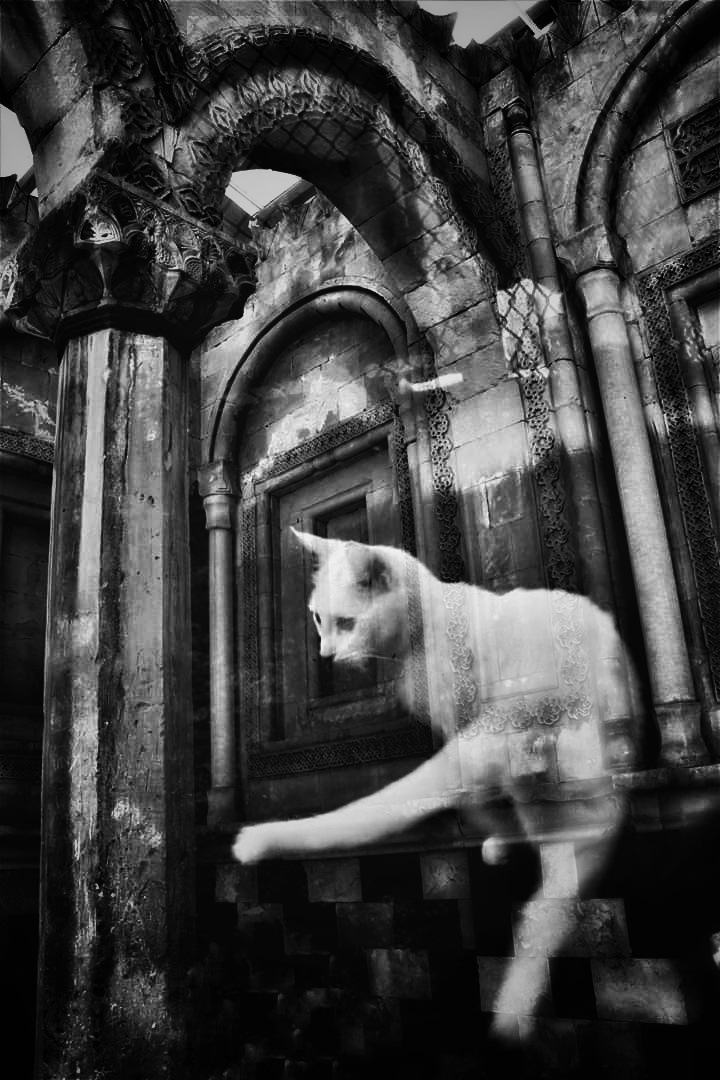 Cat and Palace by AyseA