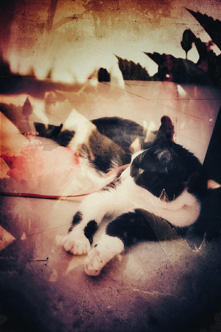 Cat in the Garden  by AyseA