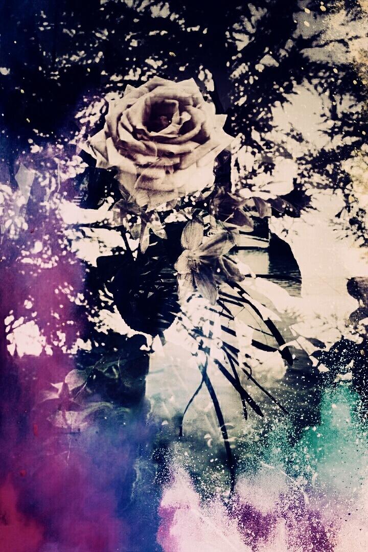 Rose by AyseA