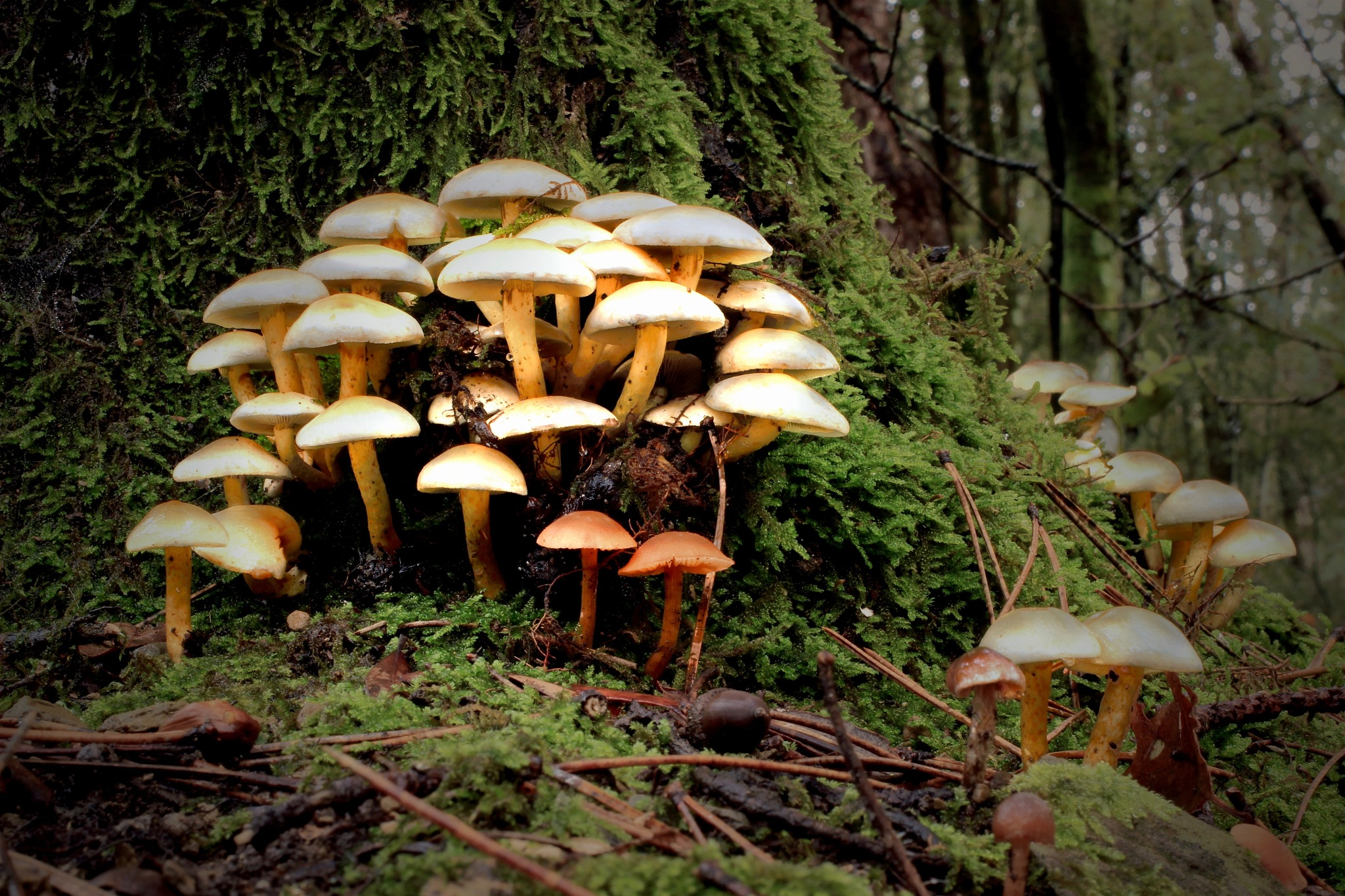 Funghi in Pratomagno by MarkSoetebierVideophotography