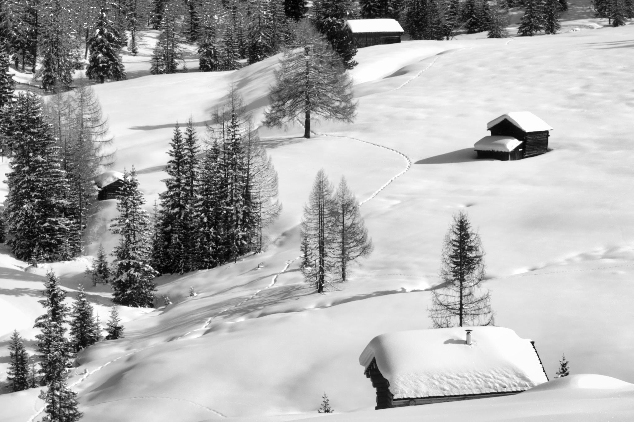 I Prati dell'Armentara by MarkSoetebierVideophotography