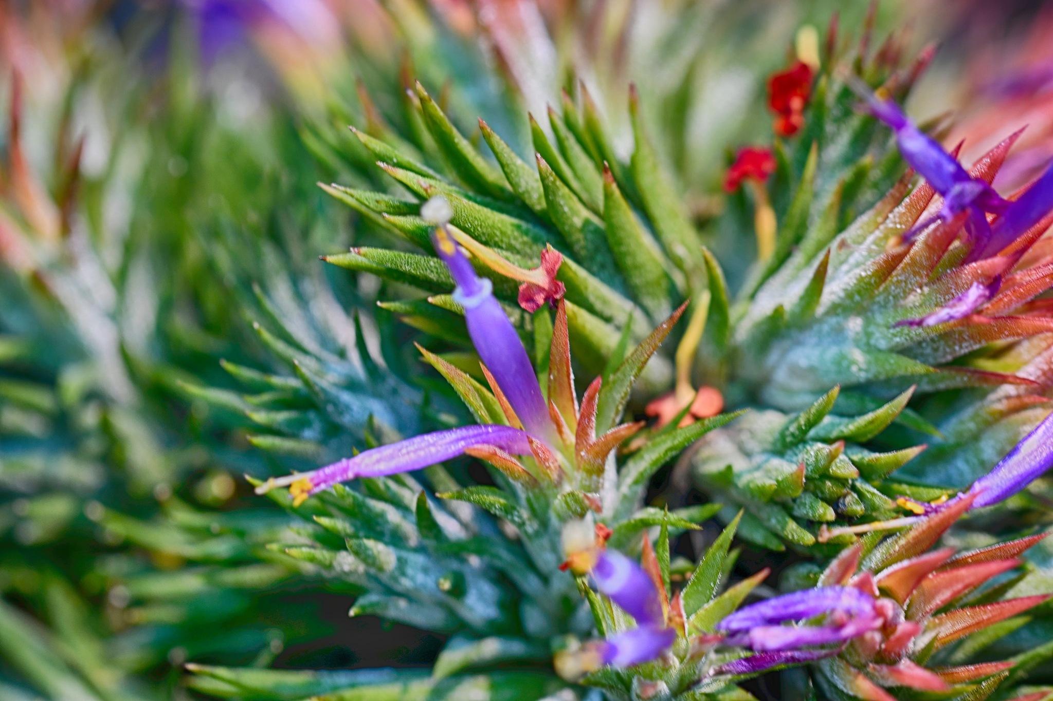 Plant by Simon Dadouche