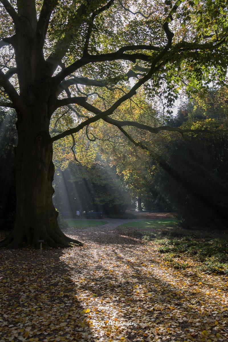 Autumn by FdeLangen