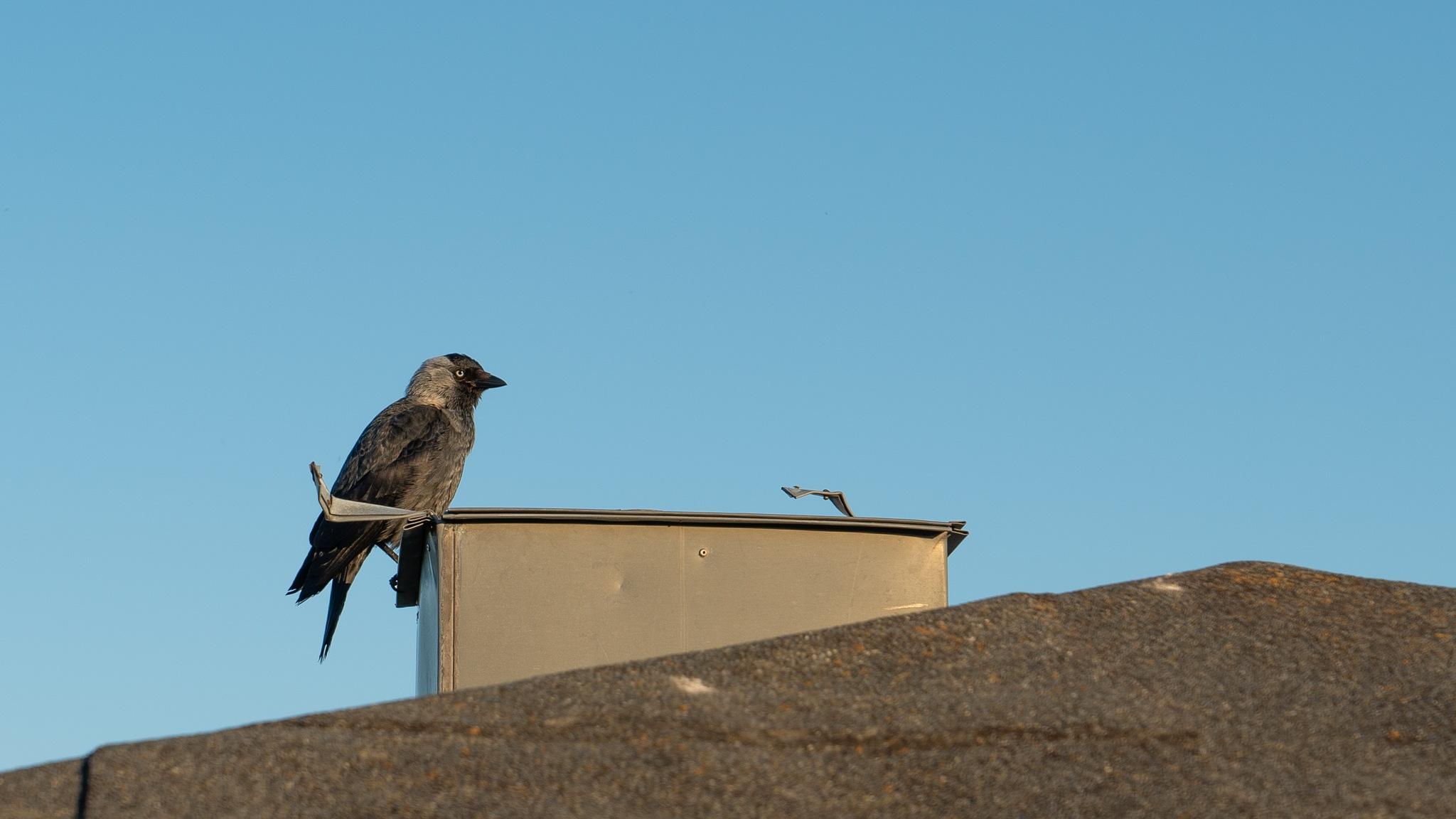 Bird by Tore Efteland