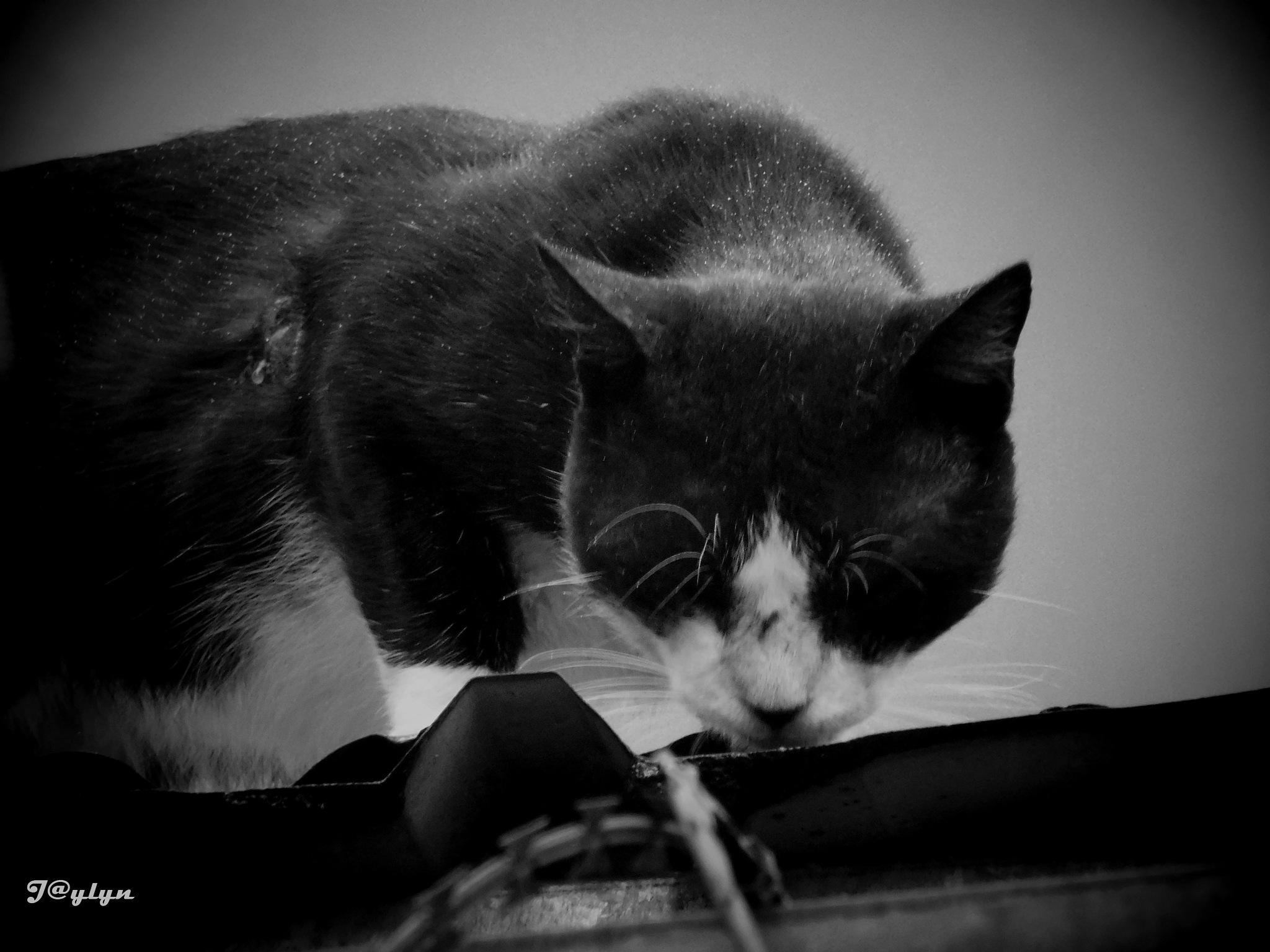 Cat by Jaylyn_Kere2