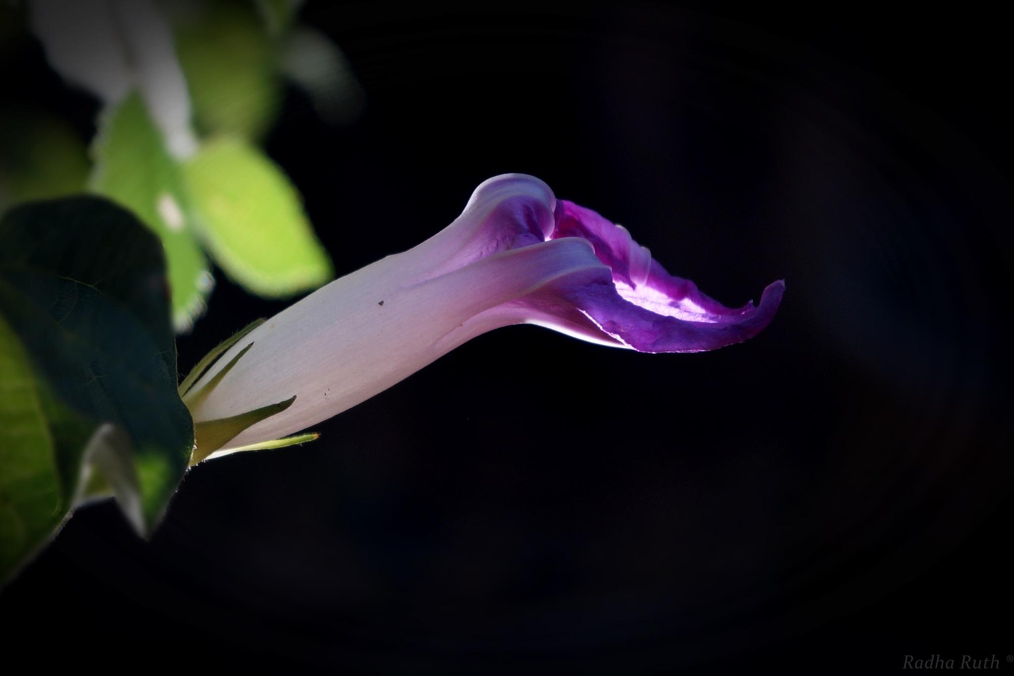 Smal gifts that my garden gives me on any given day /  Pequeños regalos que me da mi jardín un día c by Radha Ruth