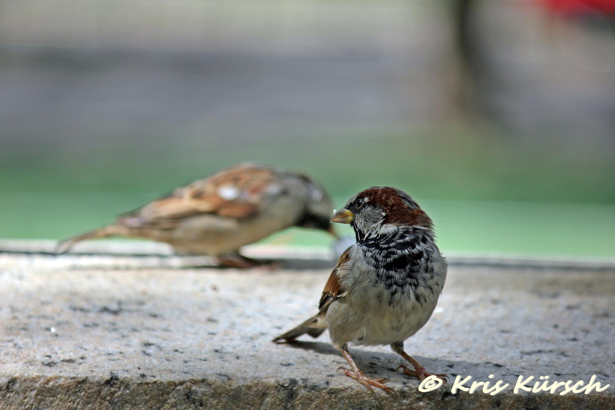 Bird's life by Kris Kursch
