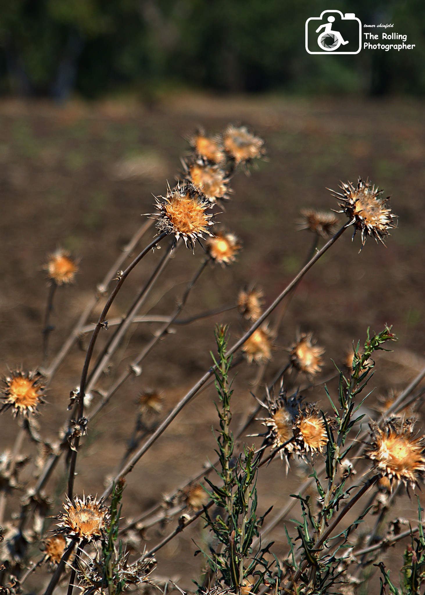 And everything I fought to grow Has withered  by tomer shinfeld