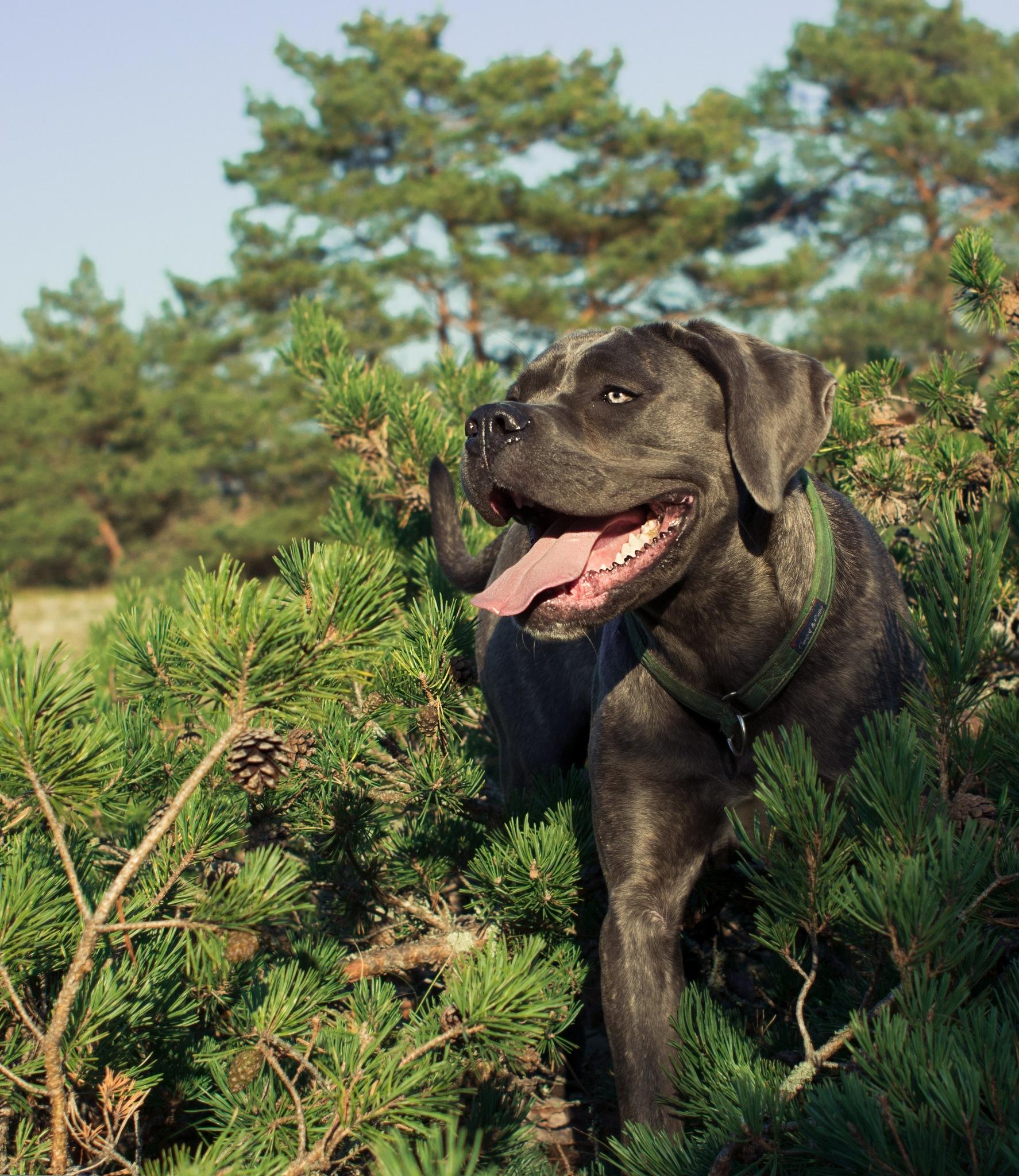 Dog Portrait by skoxen