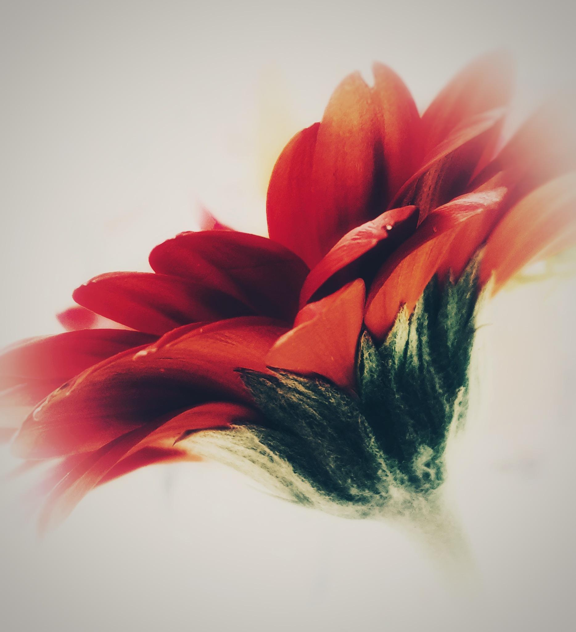 Flower by Annica Josefsson
