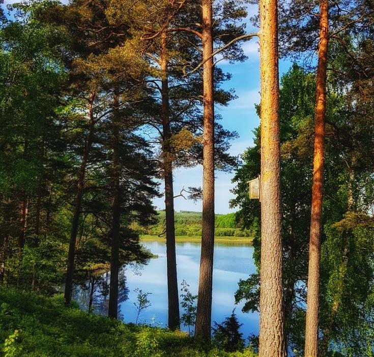 Wood by Annica Josefsson