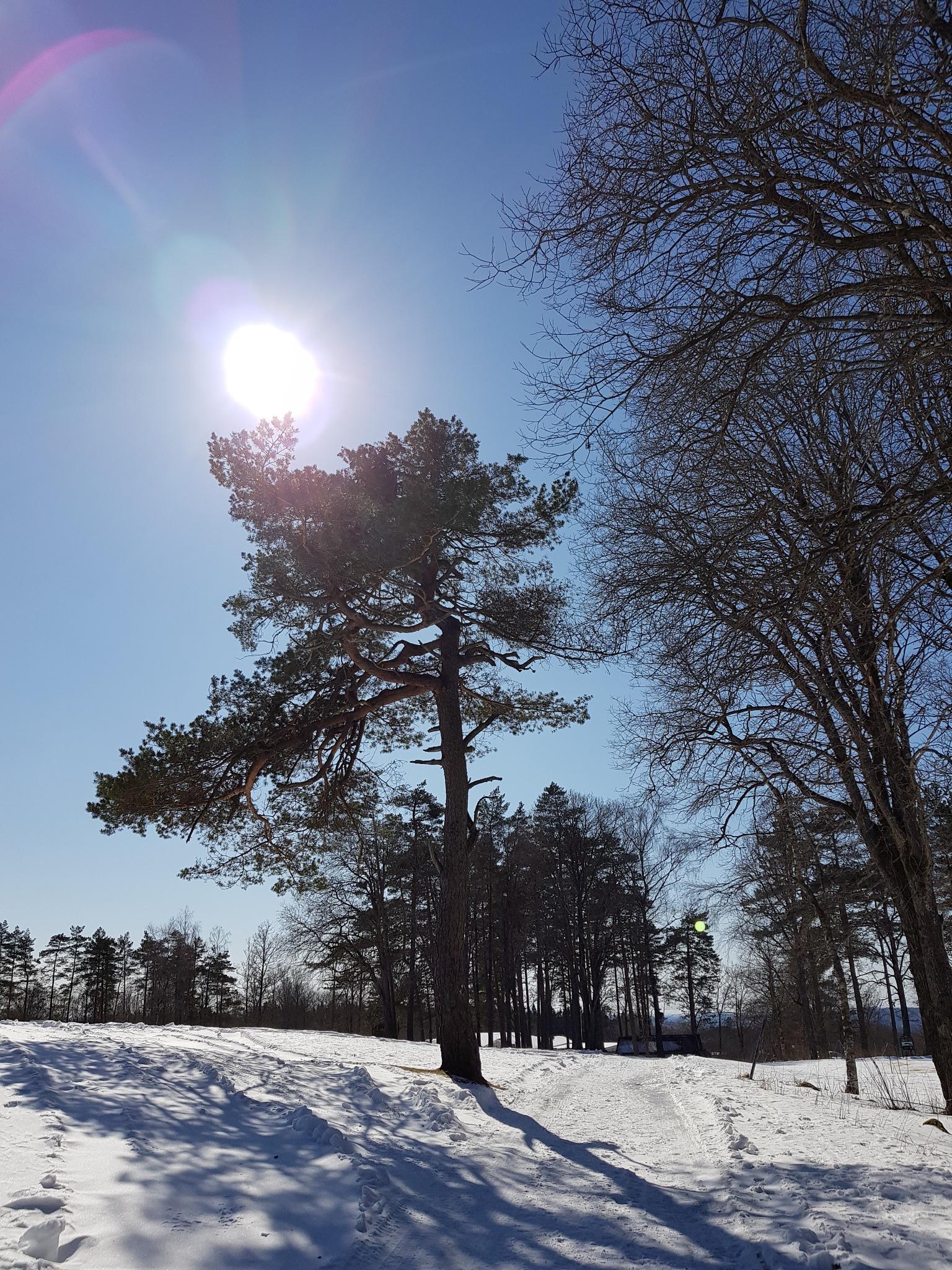 Still winter in Sweden..... by Annica Josefsson