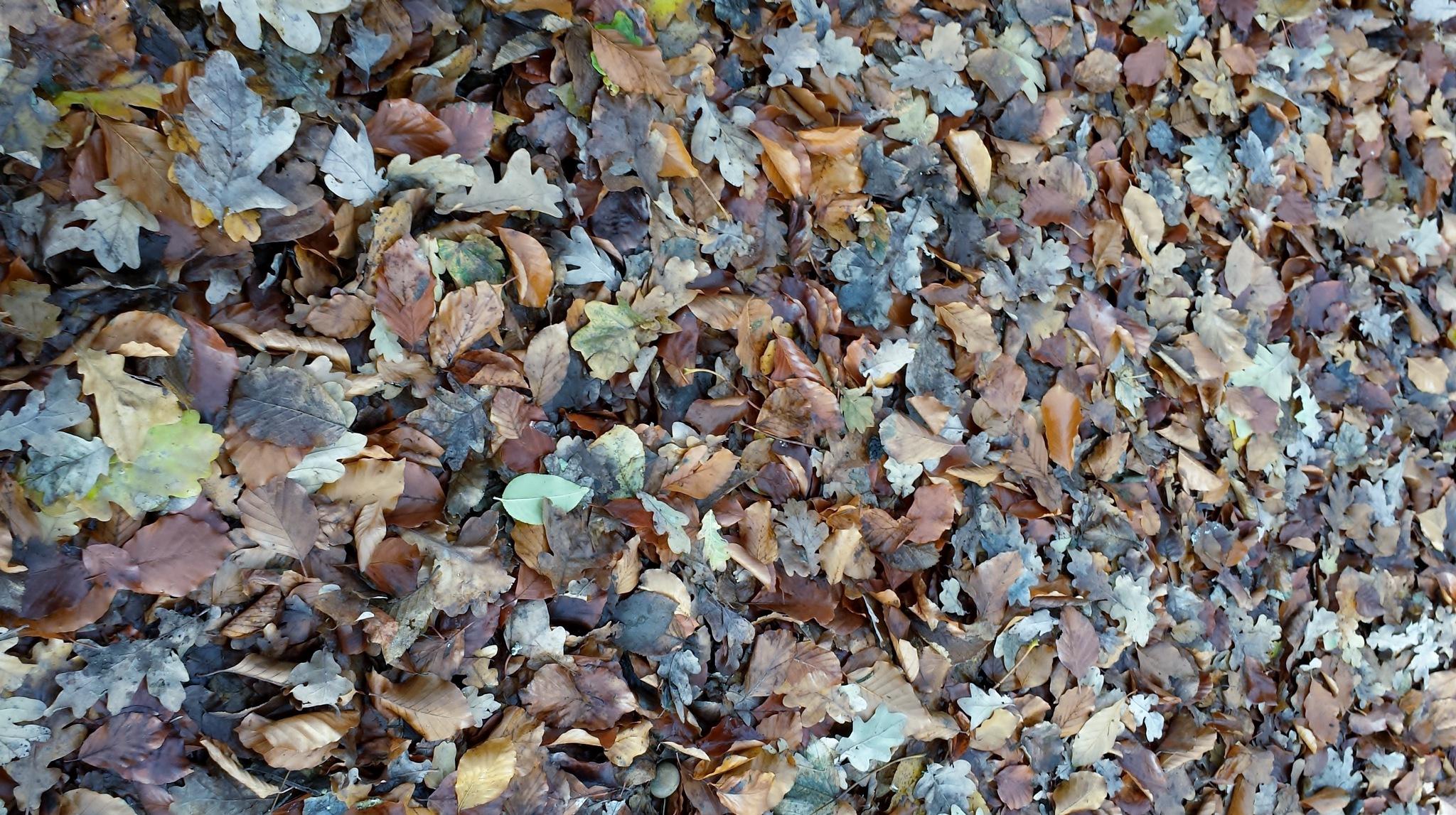 Autumn blanket.. by Diane Van Daele