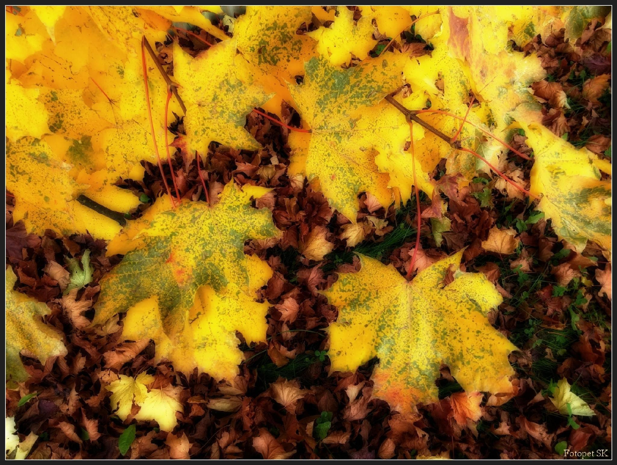 beautiful autumn ... by FotopetSK