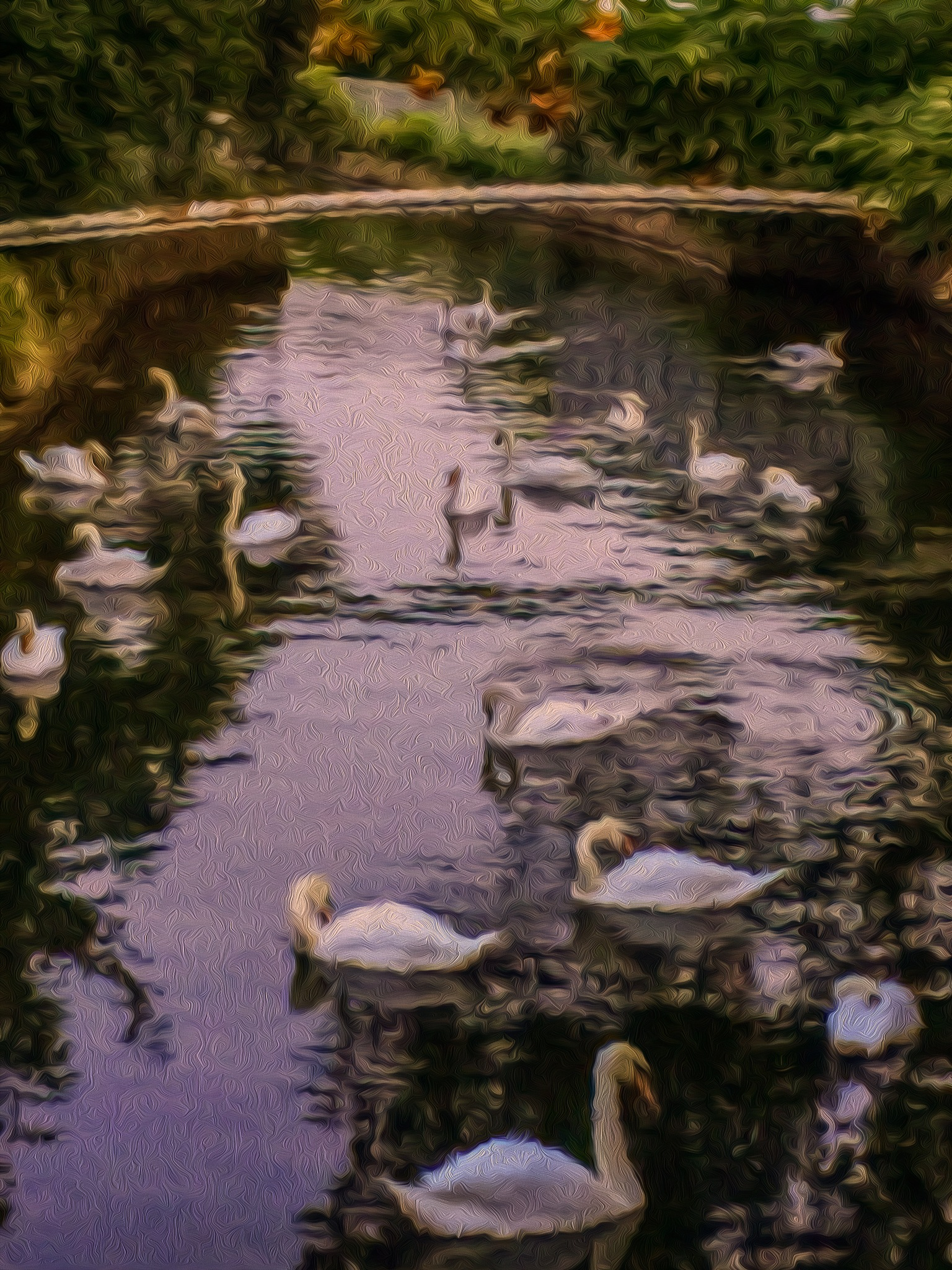 Eastbourne - Swans in a Pond by onasar
