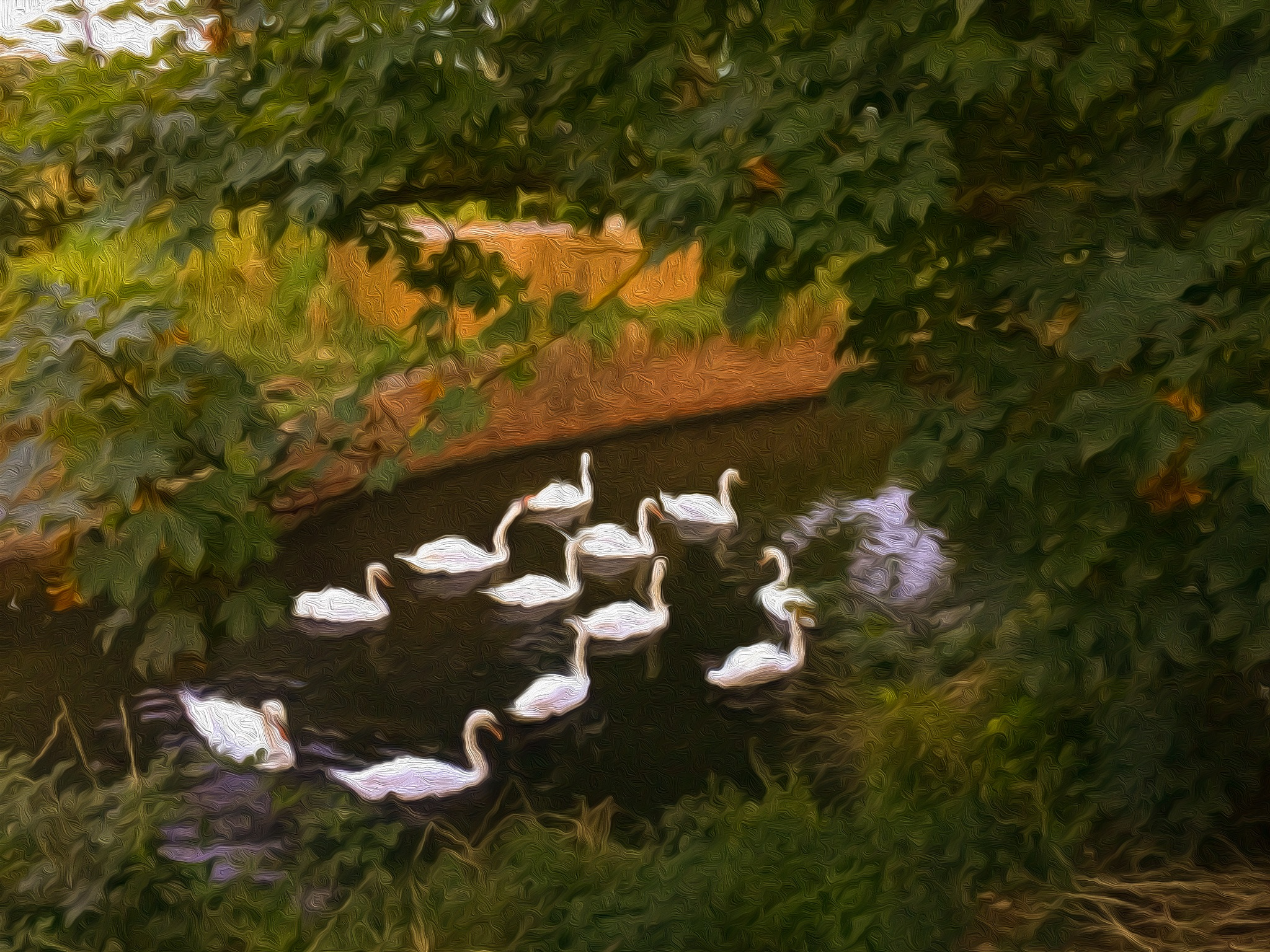 Eastbourne -Swans in a Pond 2 by onasar
