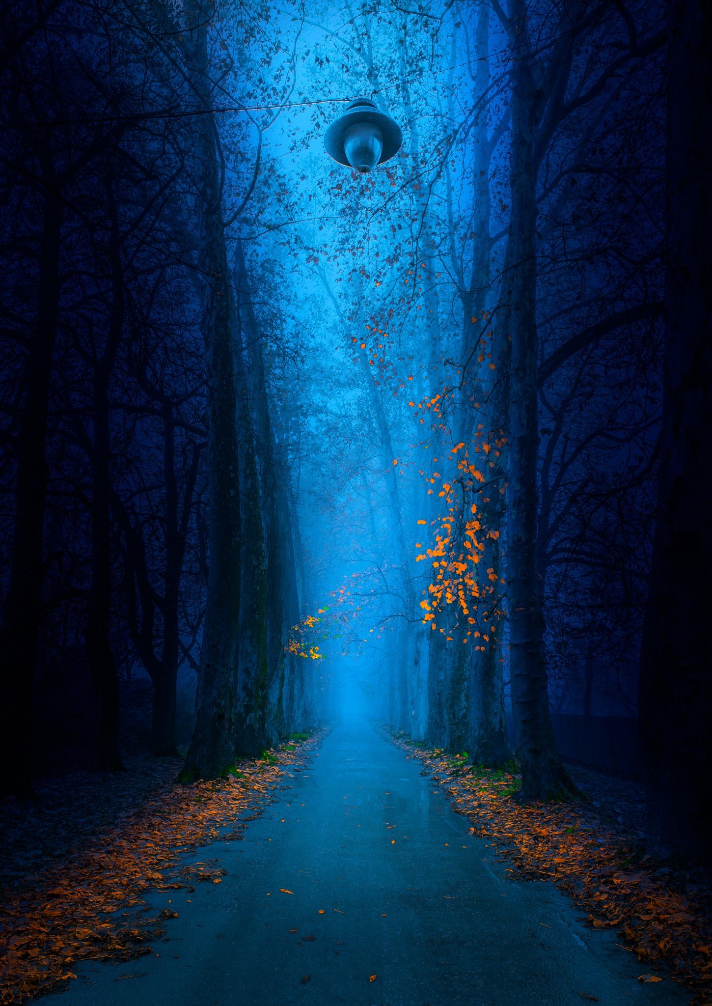 """"""" Heavenly Light """" by Mevludin Sejmenovic Msphotography"""