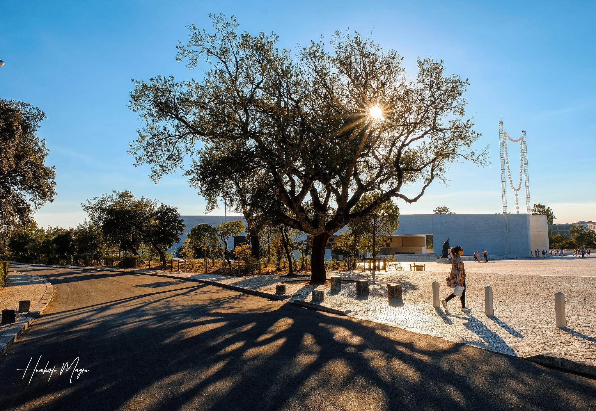 tree of life by Humberto Magro