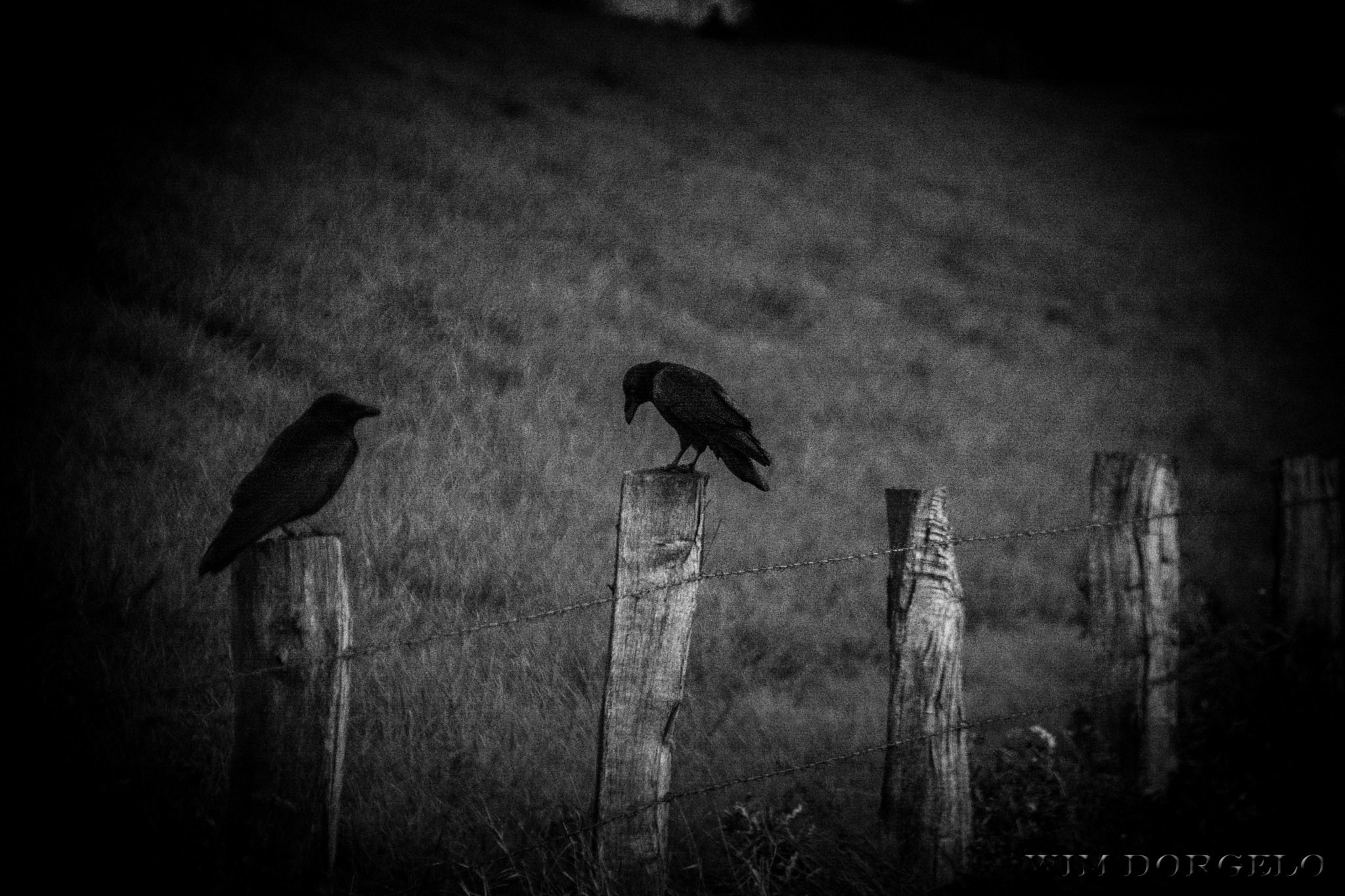 The Black Crowes by Wim Dorgelo