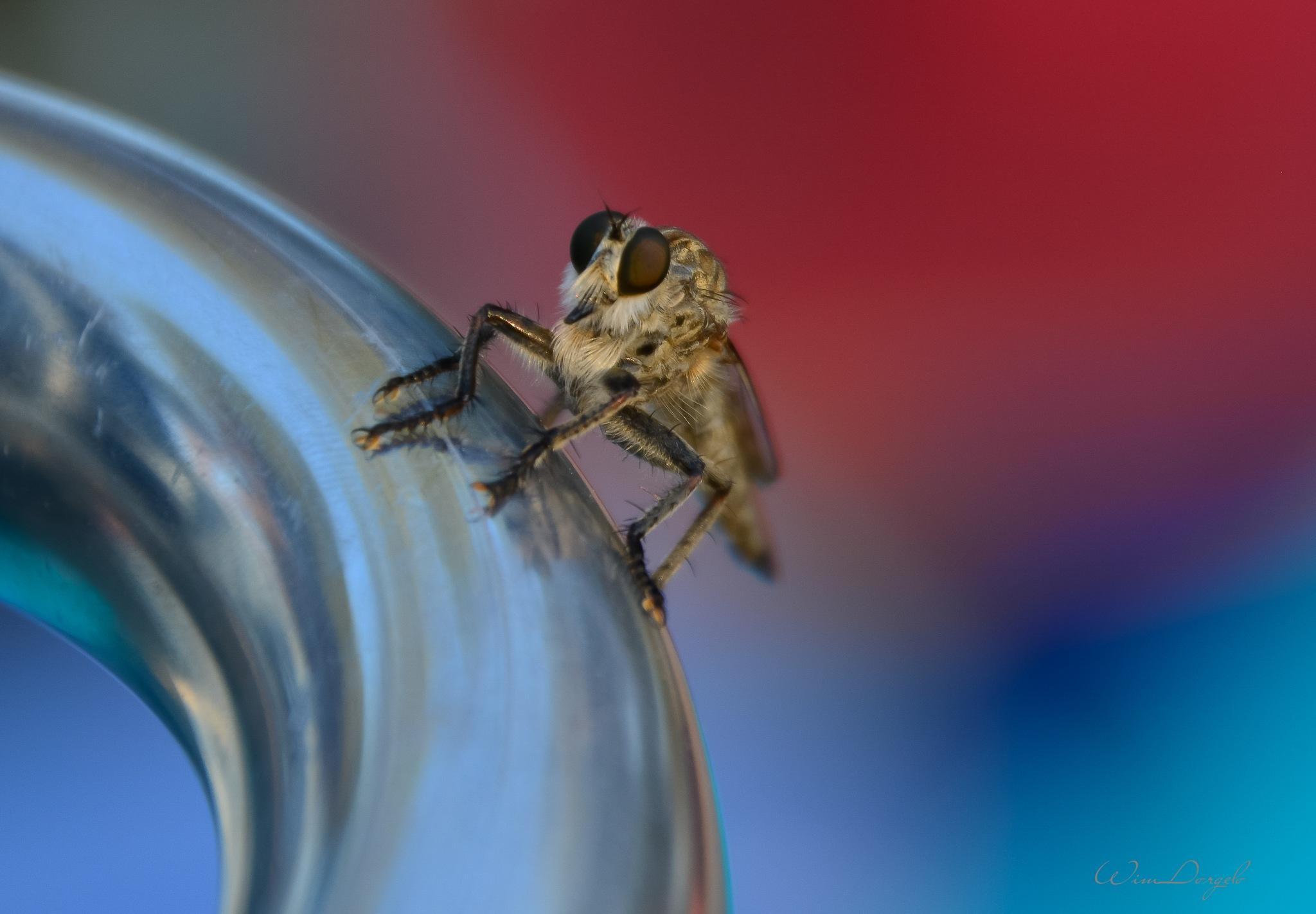 Grasshopper by Wim Dorgelo