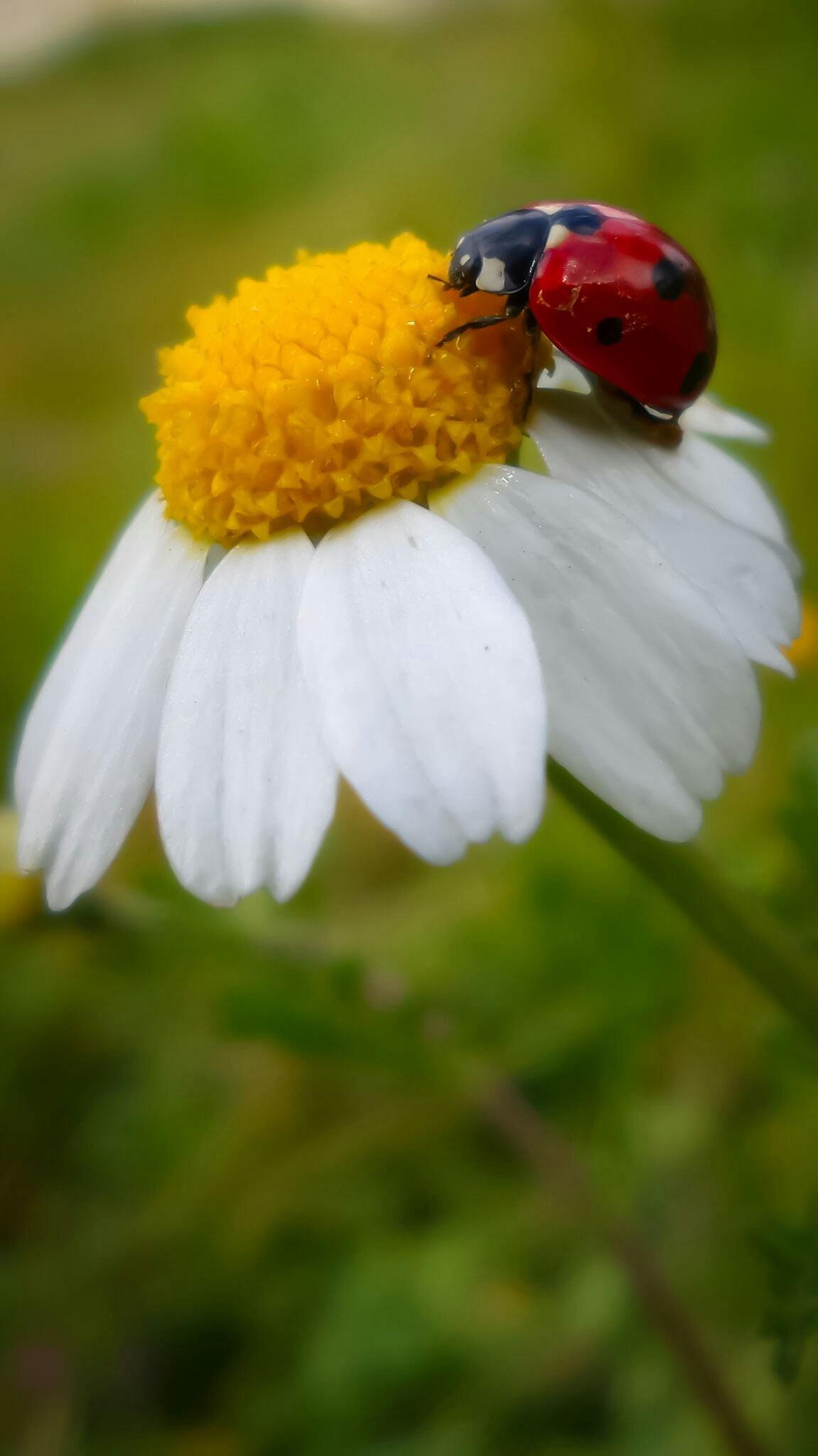 Ladybird by Noor Eddeen Alothman