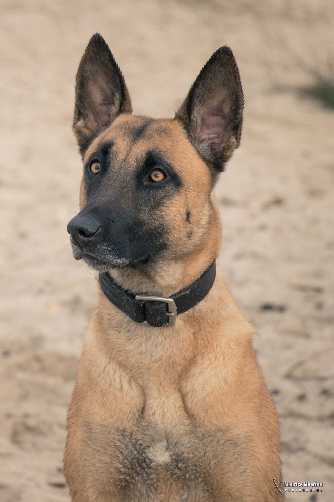 Dog by Maurice Meerten