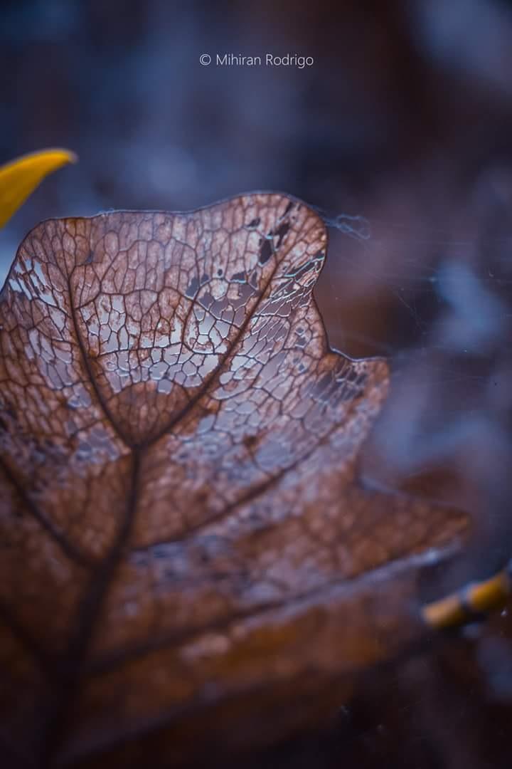 Nature pattern by Mihiran Rodrigo