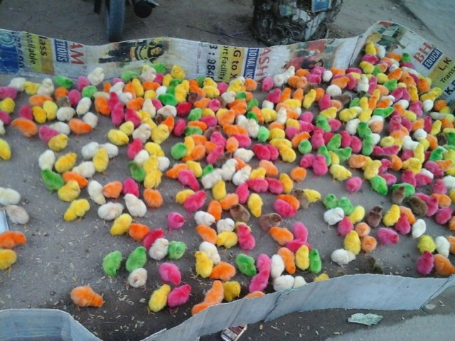 colorful chicks by smita singh