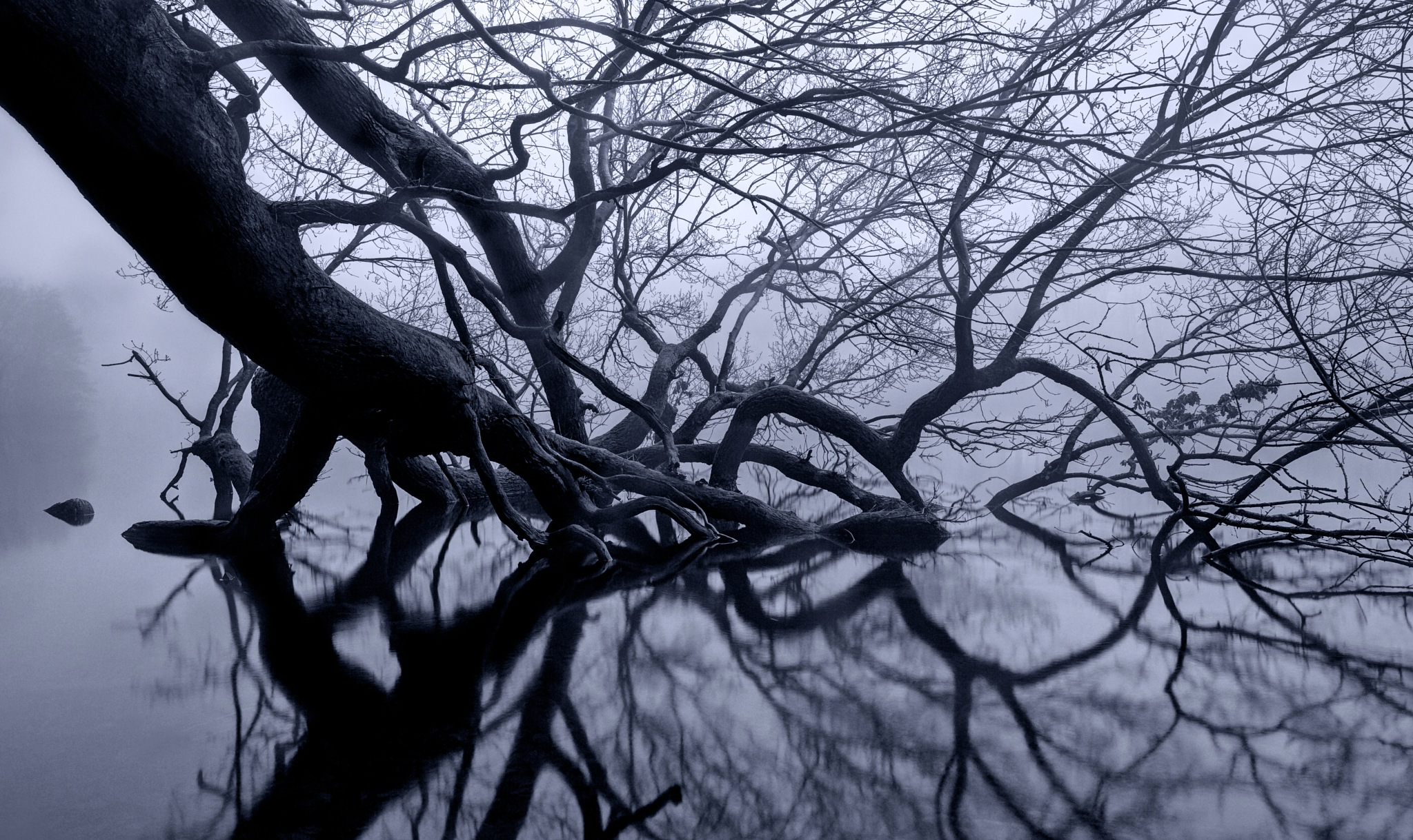 Intricate by Keld Bach Photography