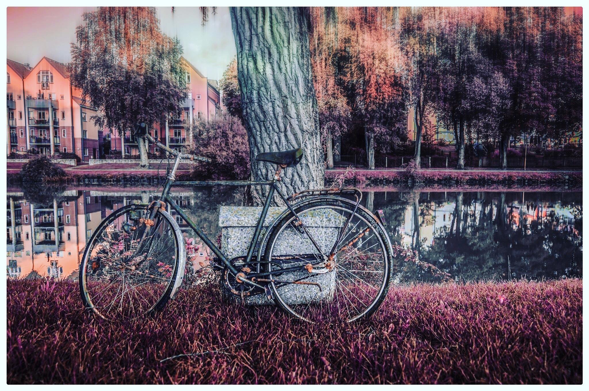 Bicycle by Erik Berrio