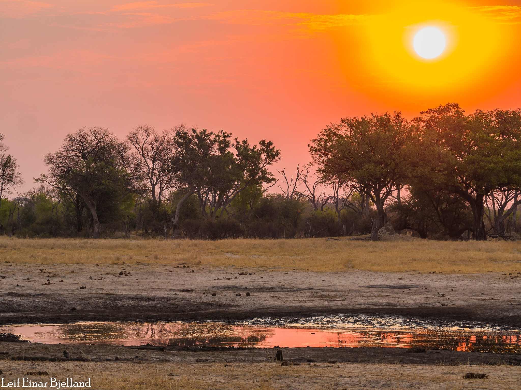 Photo in Nature #sunset #africa #safari