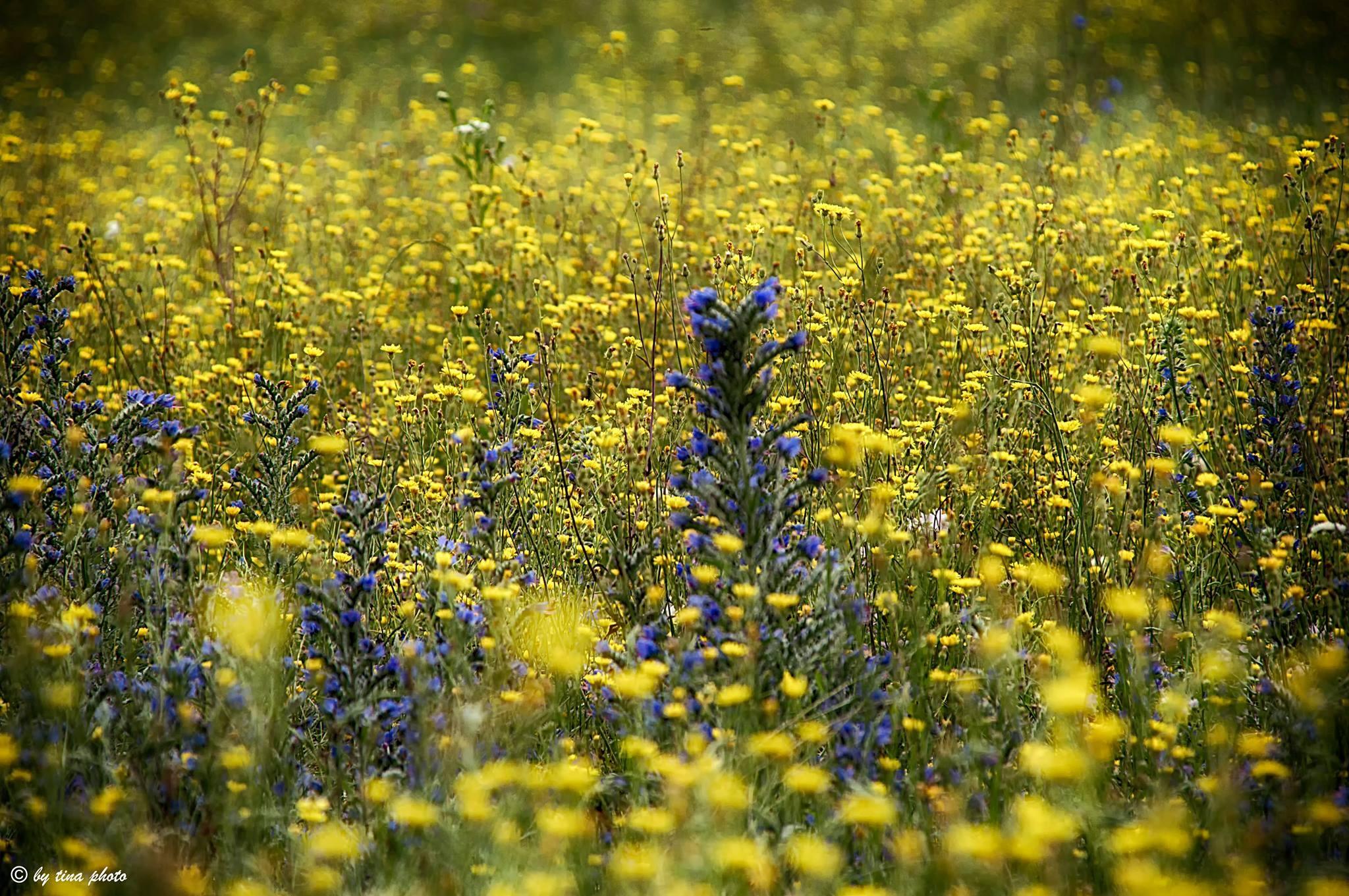 Field of flowers by Kristina Jelenčić