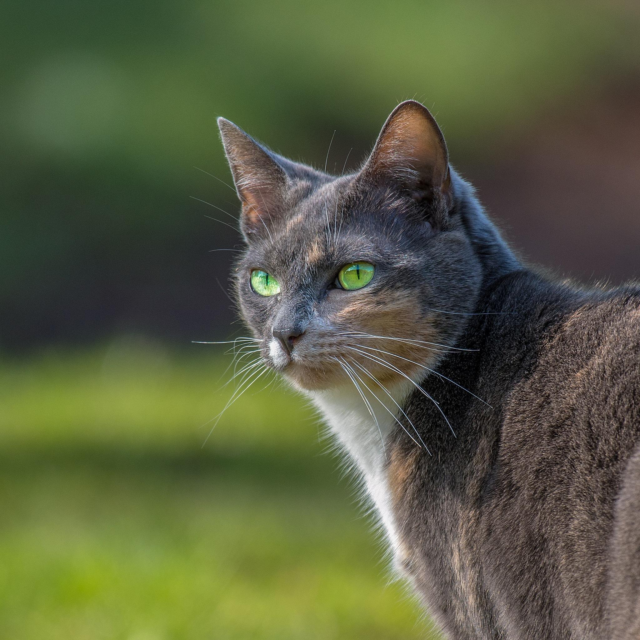 Cat by Gerard Manders