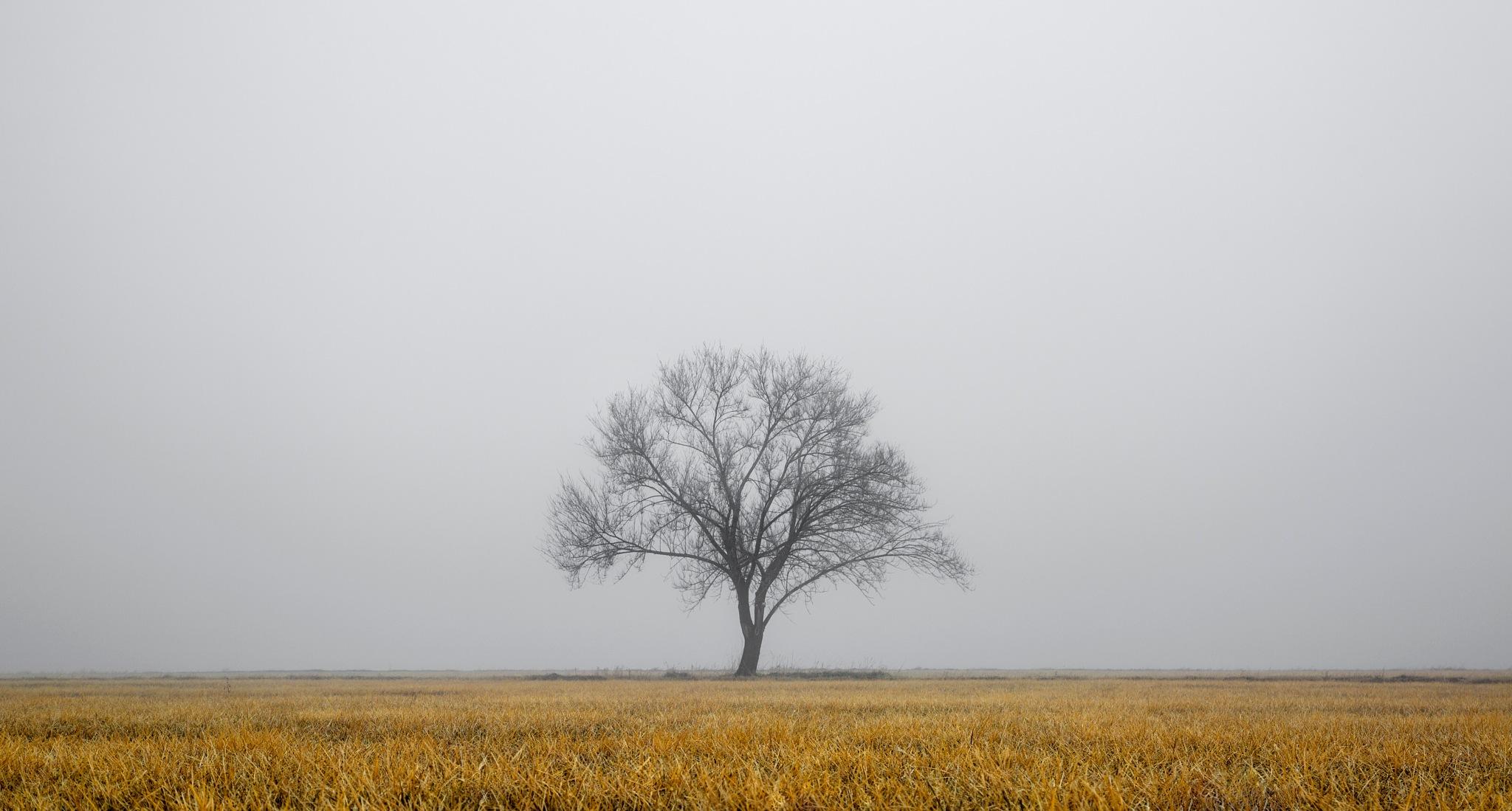 the tree of life by Eddie Tkowksi