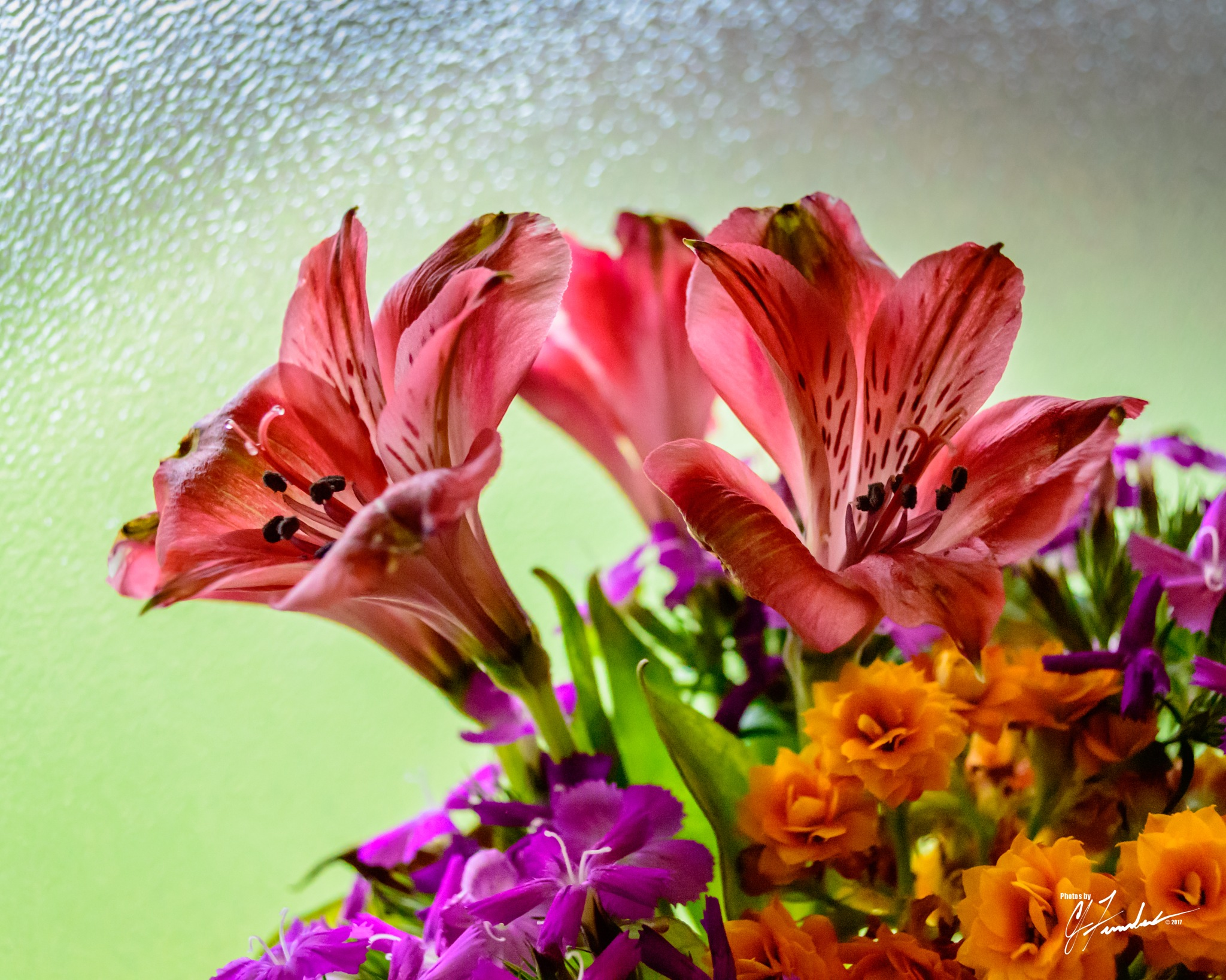 Spring Flowers by CJ Fenstermaker