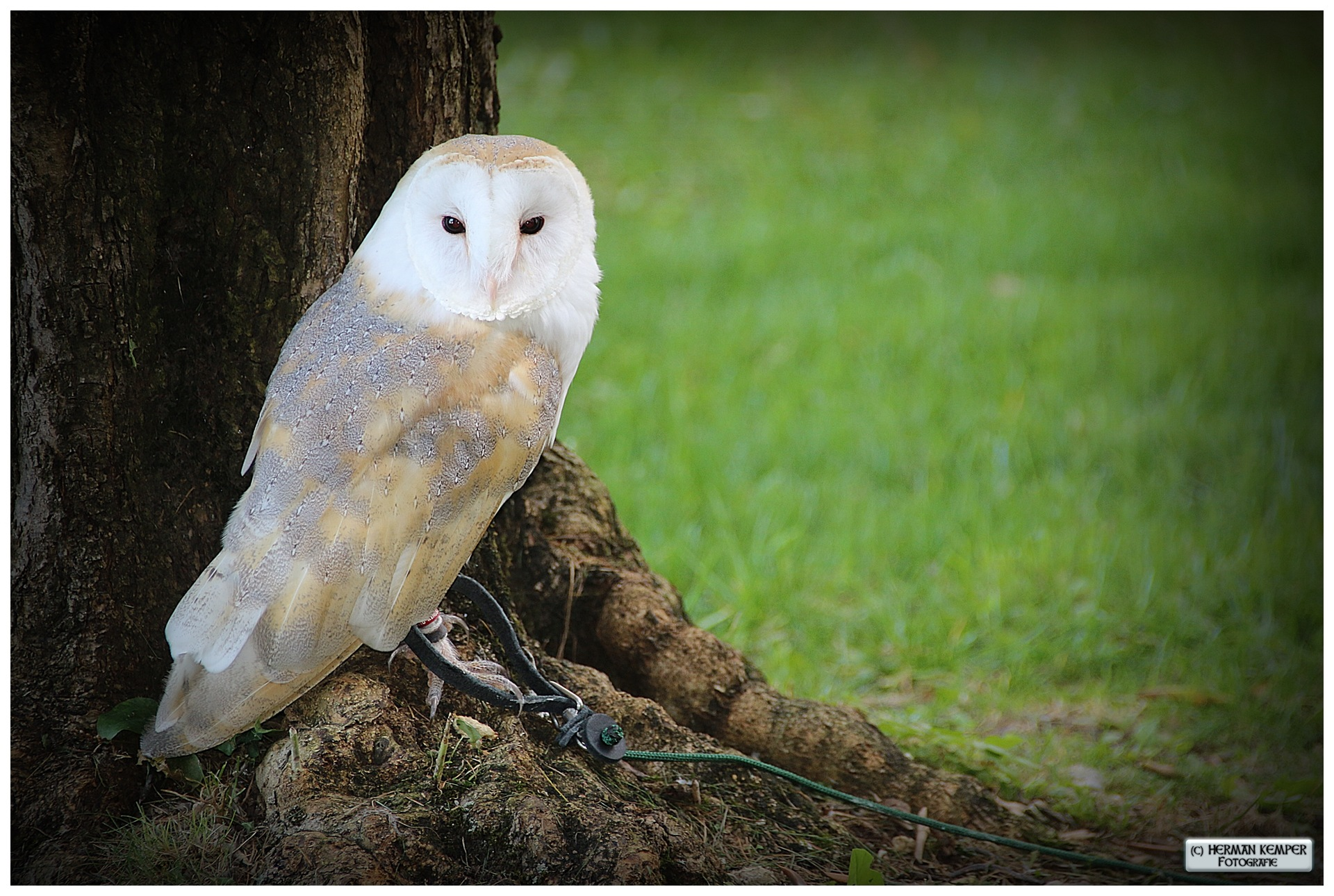Owl by Shoot-by-Herman