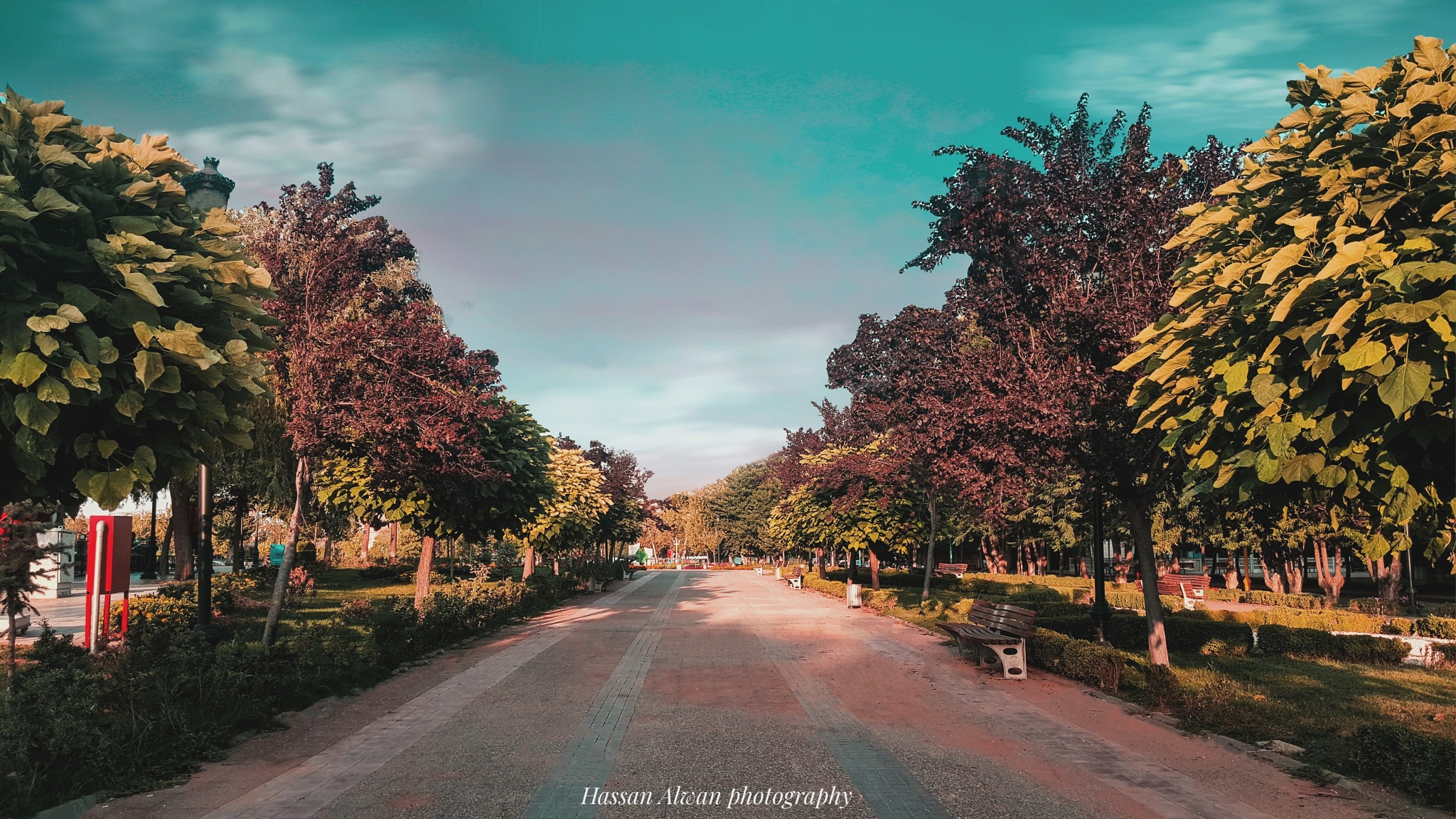 Untitled by M Hassan Alwan