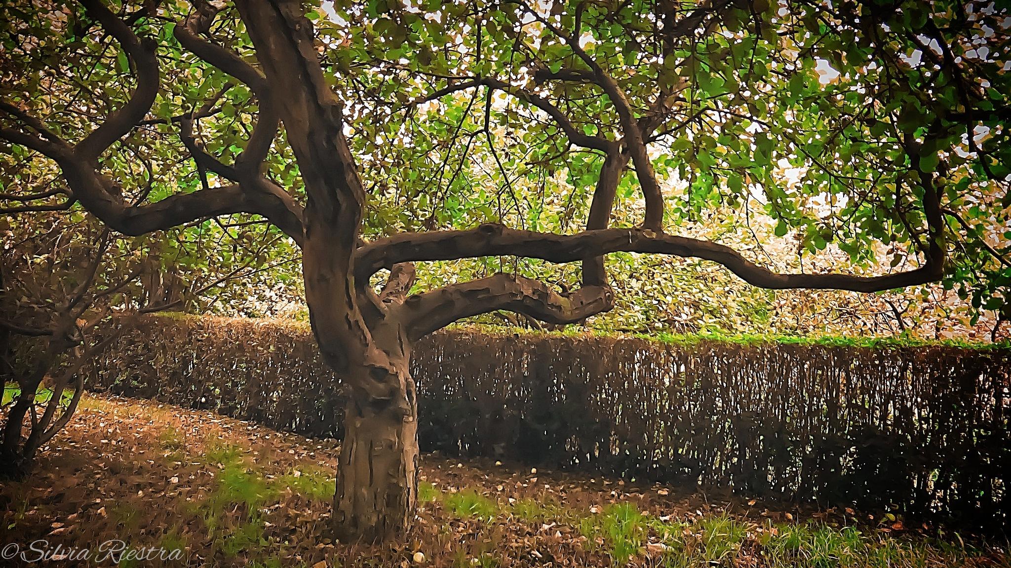 Tangle Tree I by Silvia Riestra