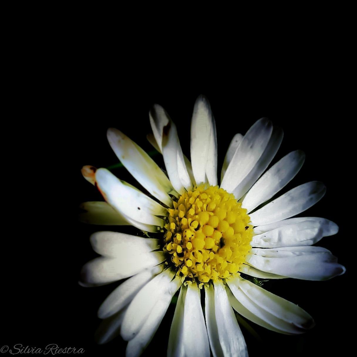 Light in the Dark by Silvia Riestra