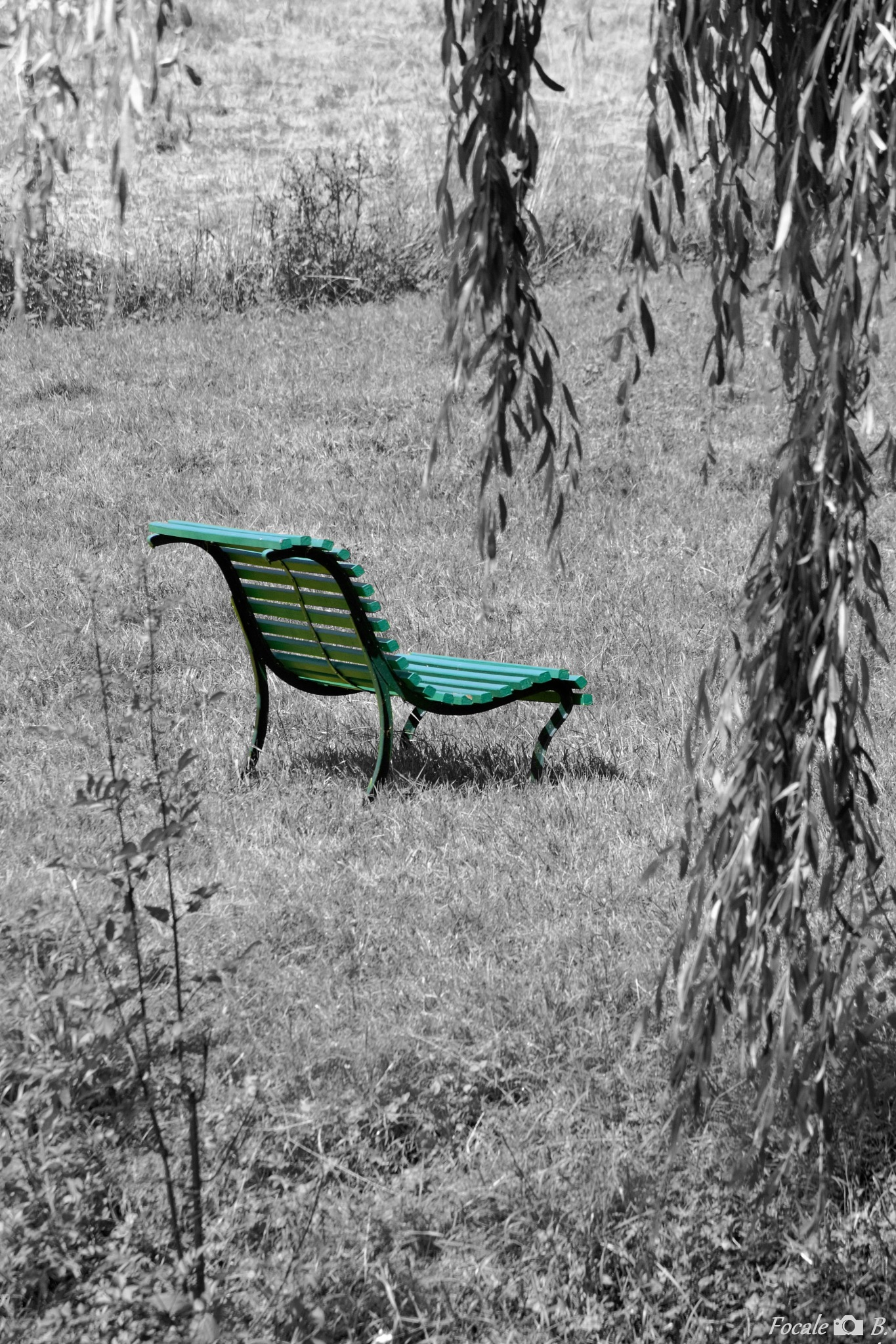 The green bench by Focale B.