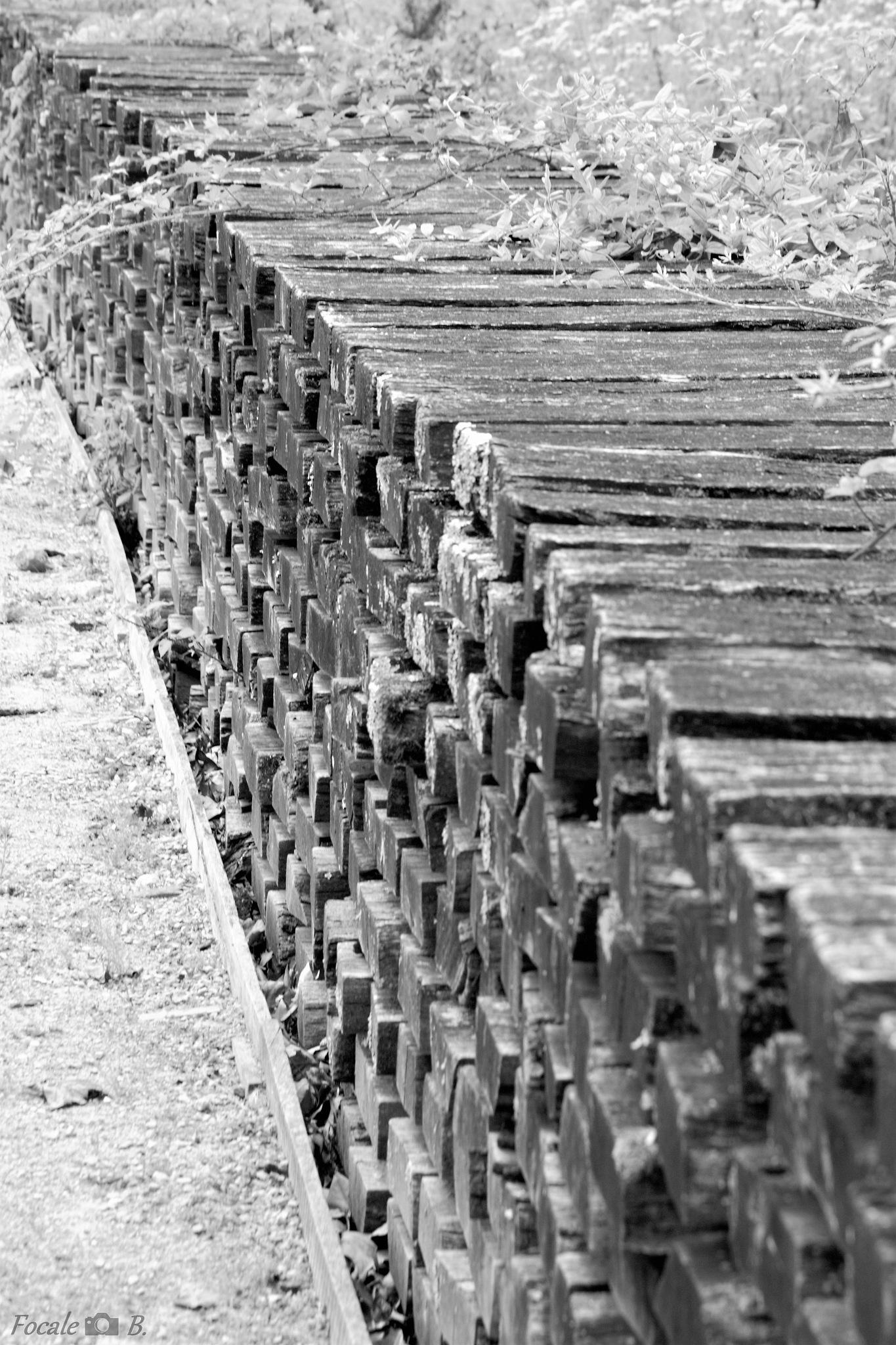 wood logs in b&w by Focale B.