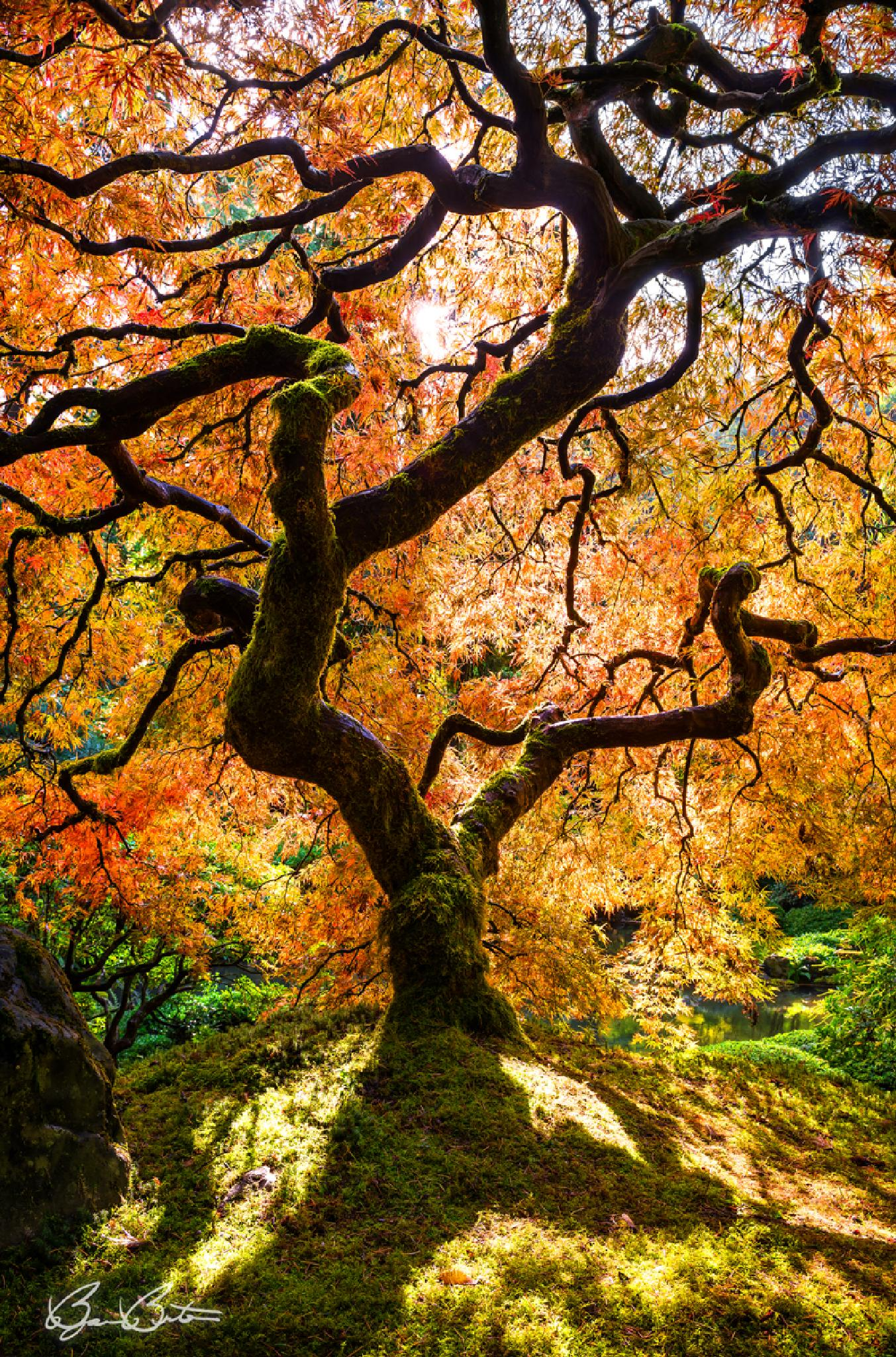 Stained Glass Foliage by Björn Burton Photography