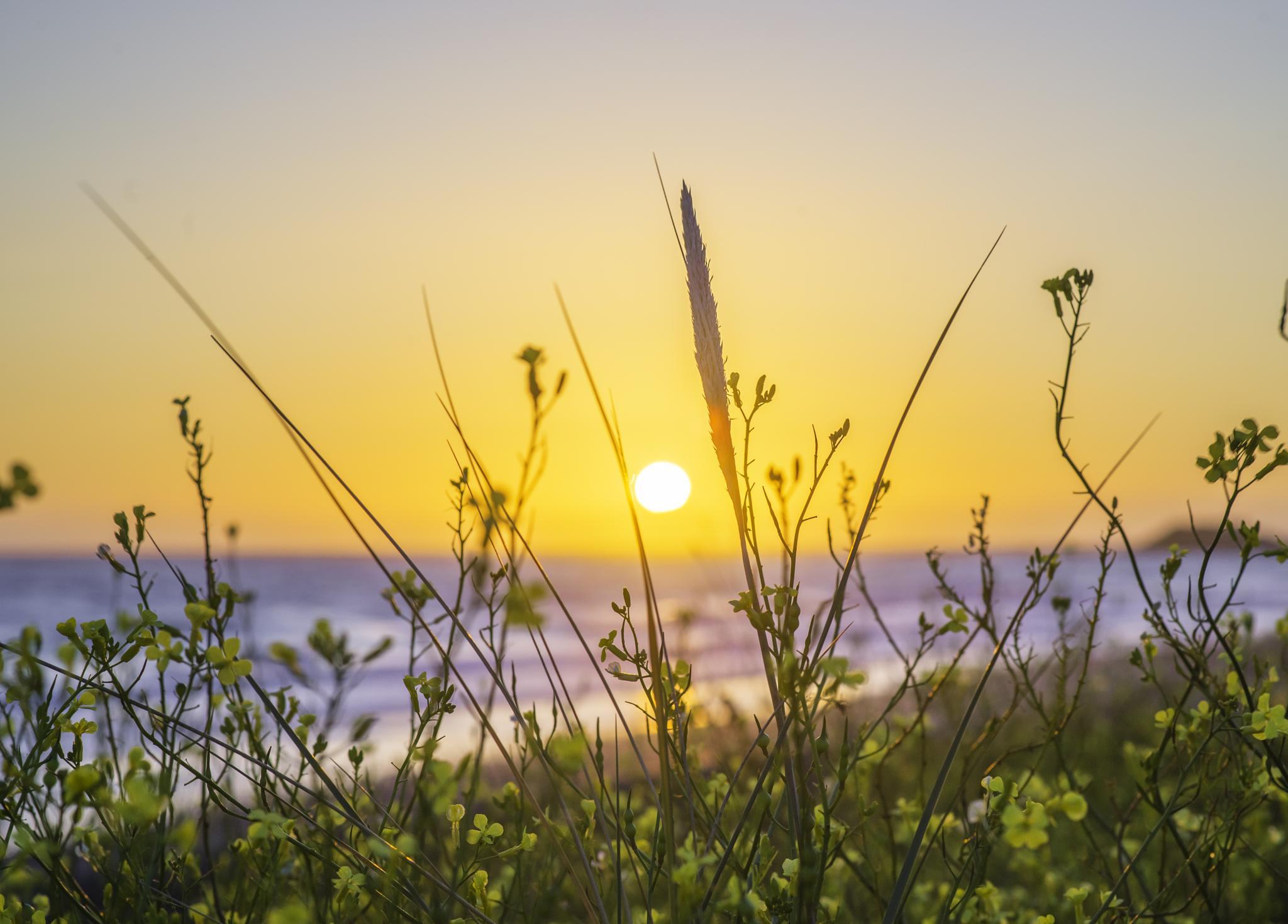 summer sun by Alan Pryor