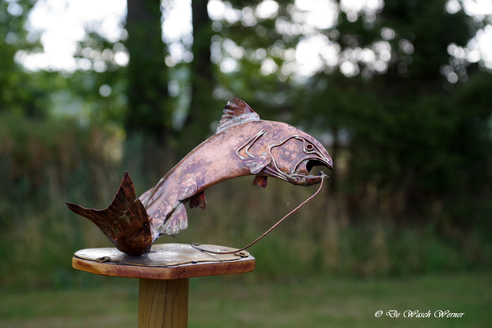 fish by Werner De Wasch