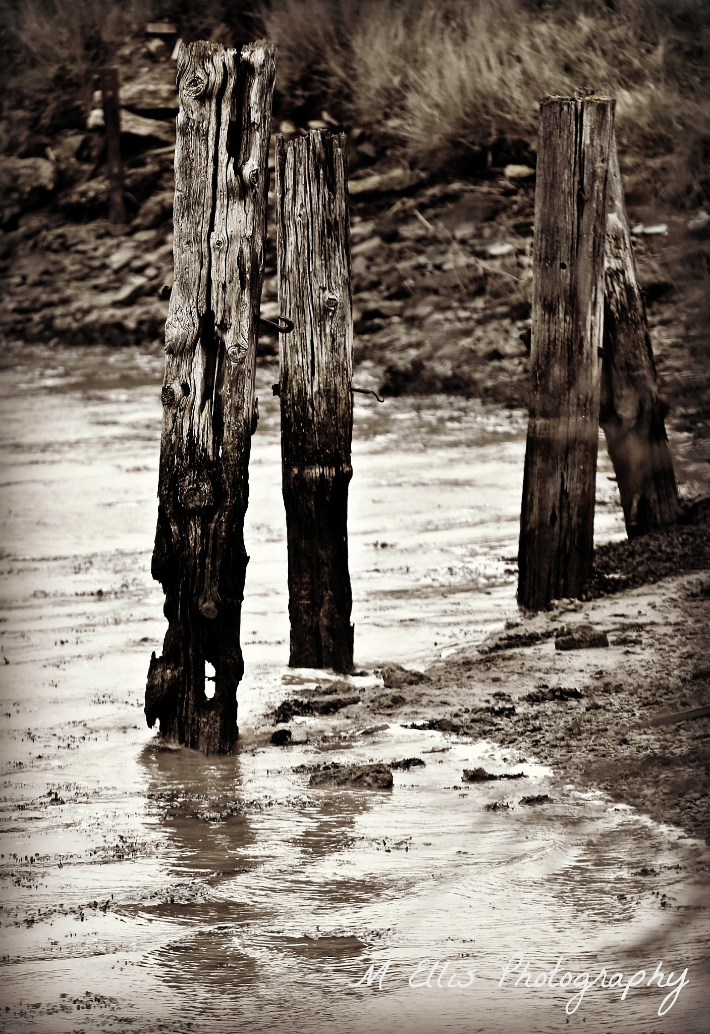 There's a hole in my rotten pier wood.... by Martin Ellis