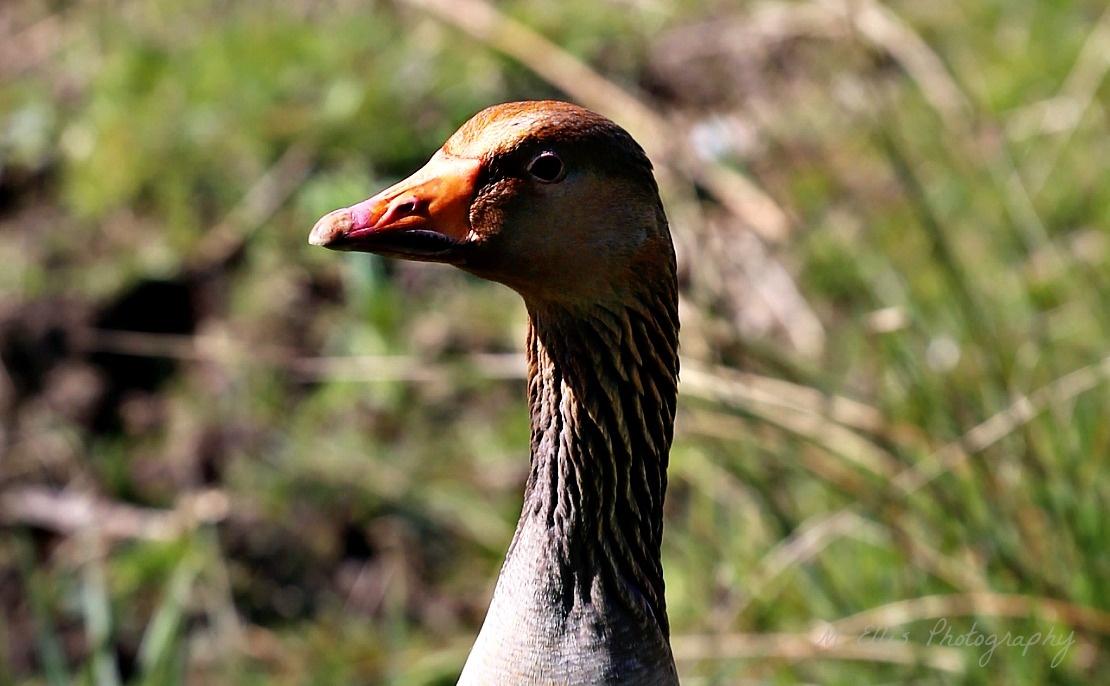 Geese head inn detail. by Martin Ellis