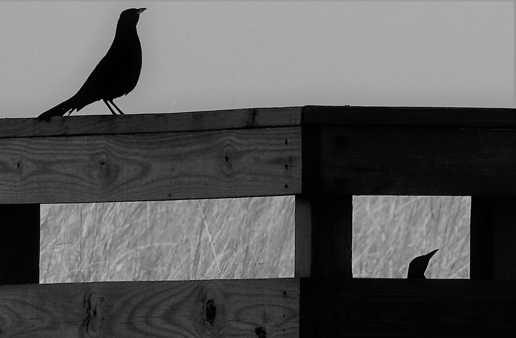 Birds by Susan Harrison