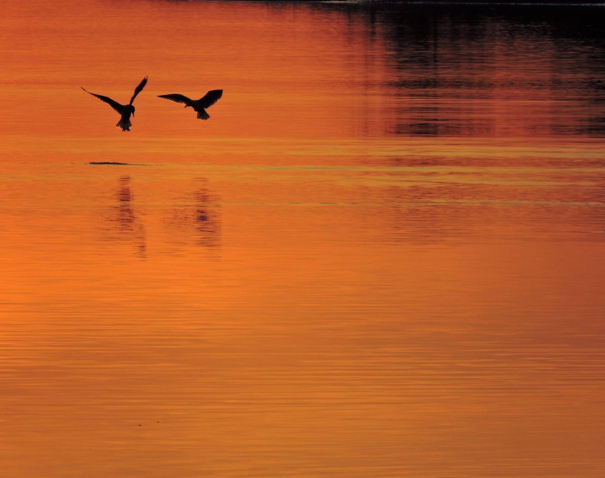 Sunset landing by Susan Harrison