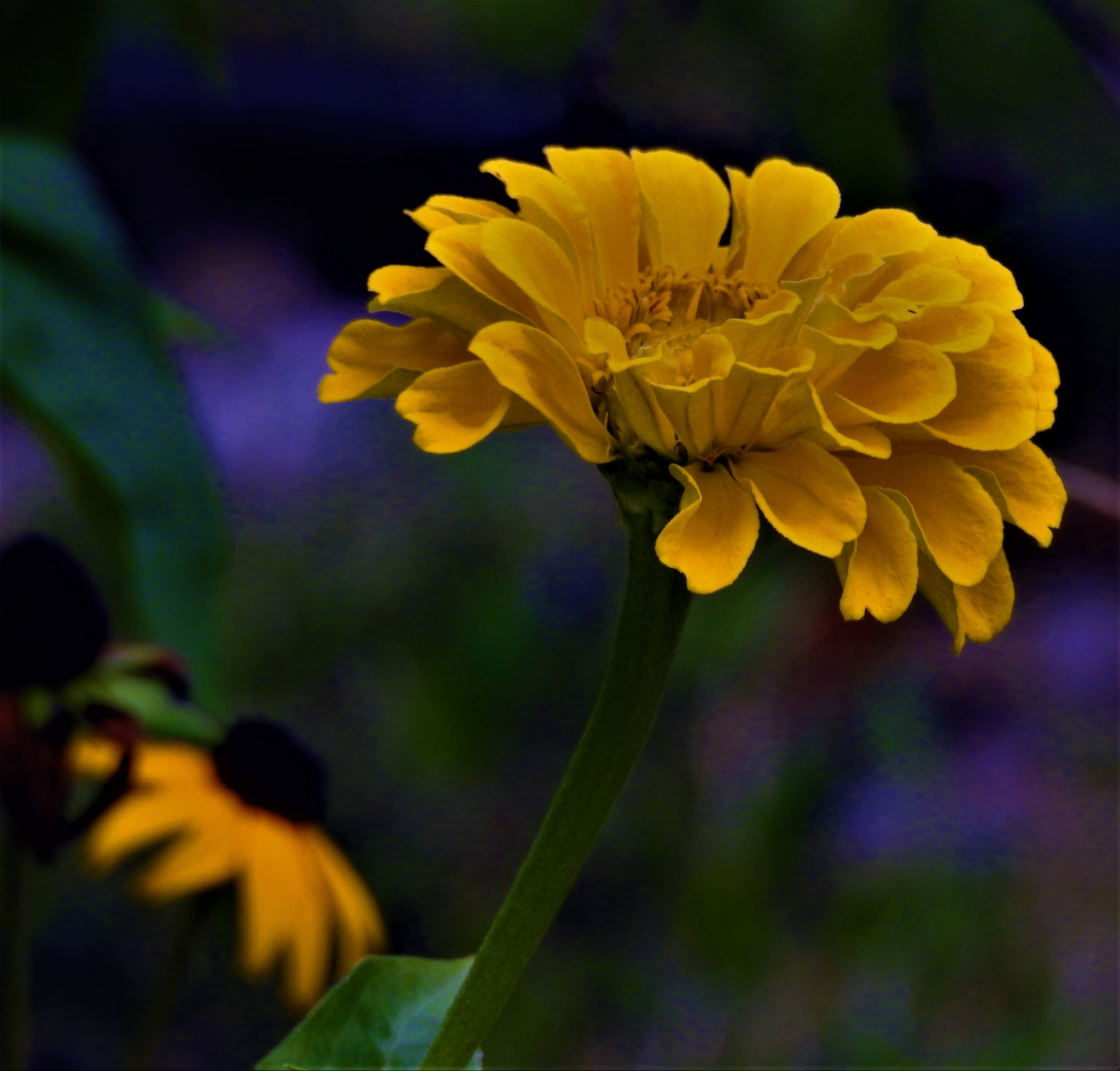 Yellow by Susan Harrison