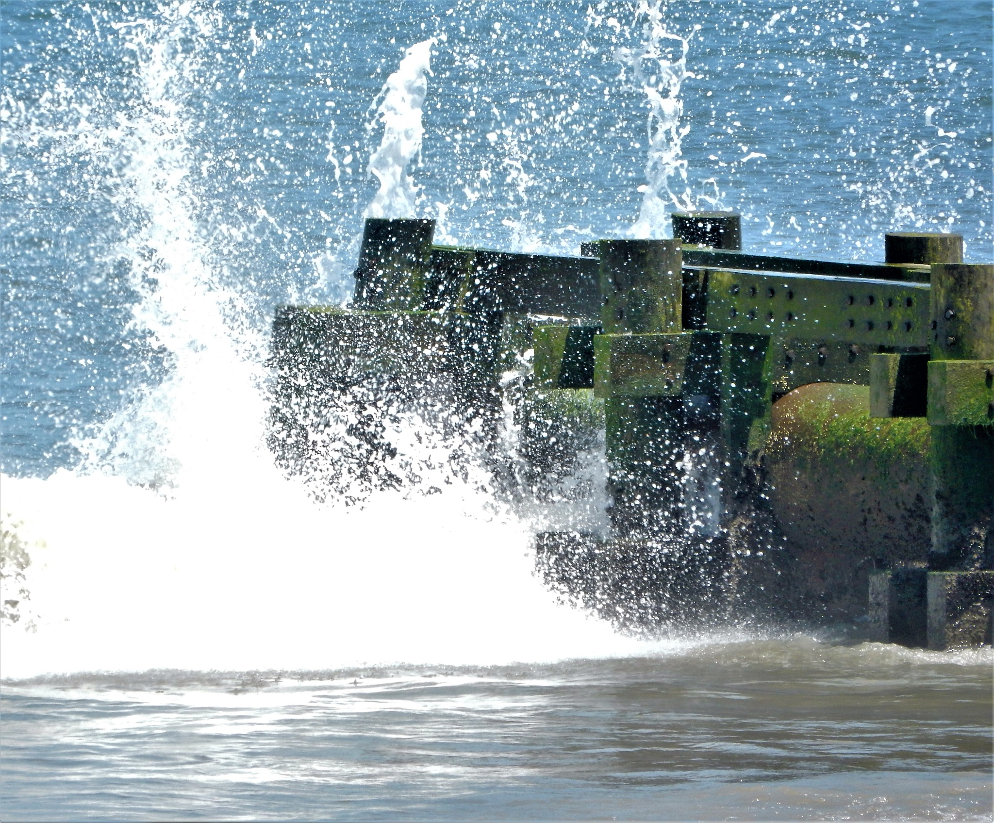 Splash! by Susan Harrison